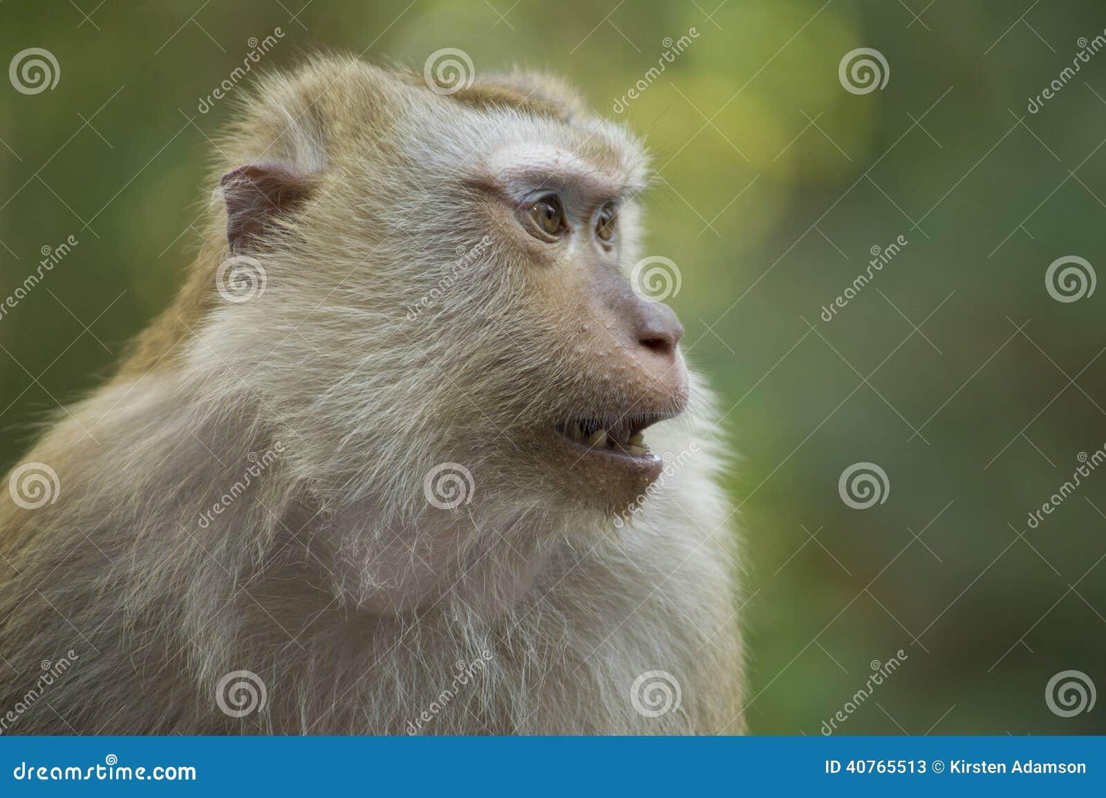 Un singe en Thaïlande