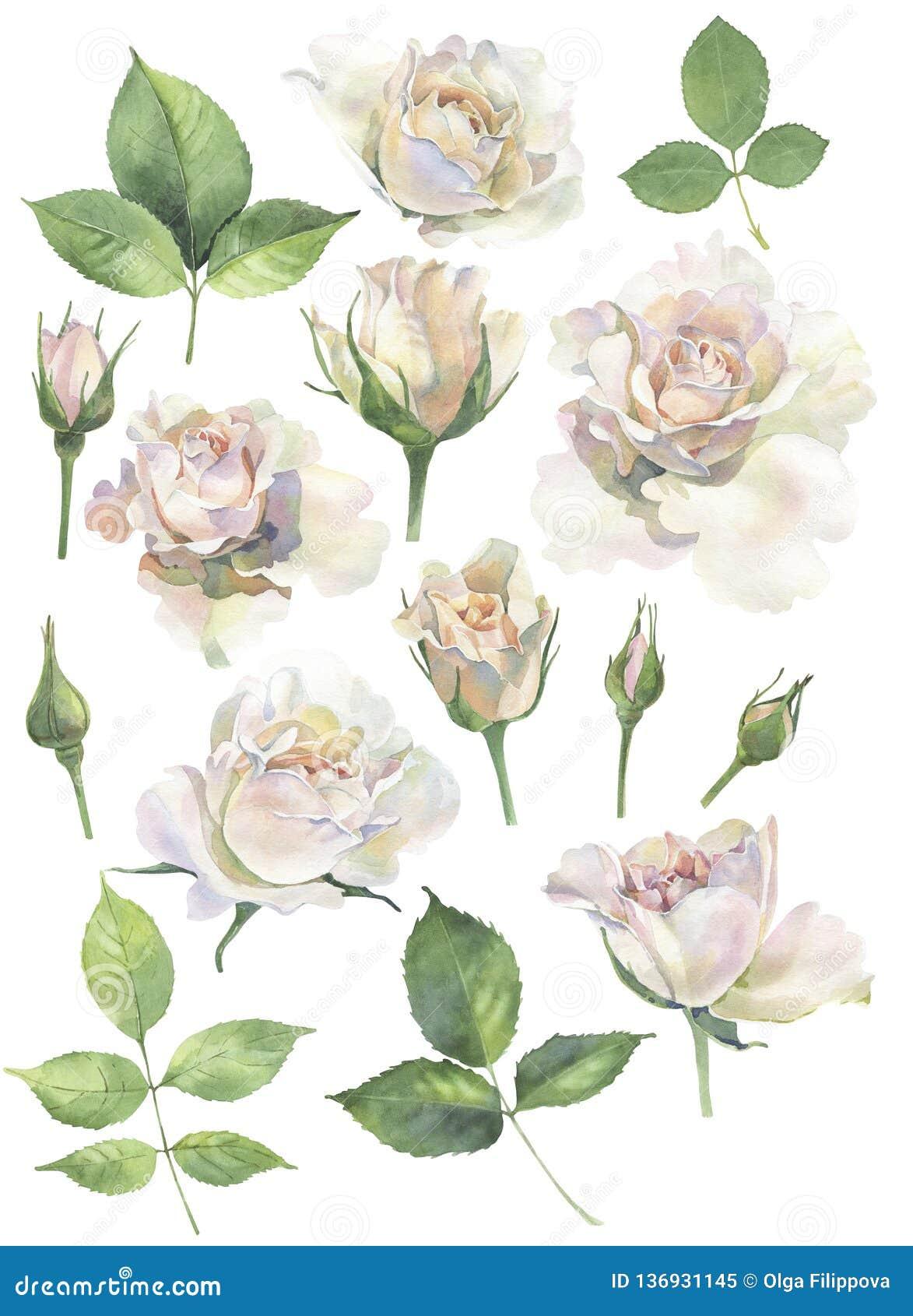 Un sistema de las rosas para las invitaciones