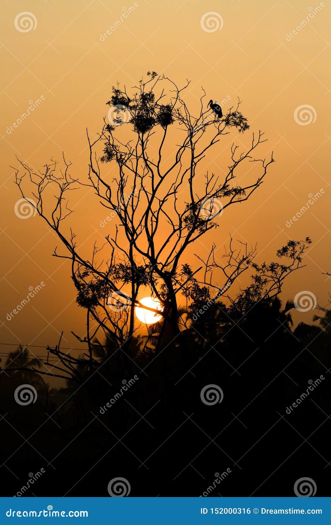 Un sol glorioso que brilla a través de un árbol