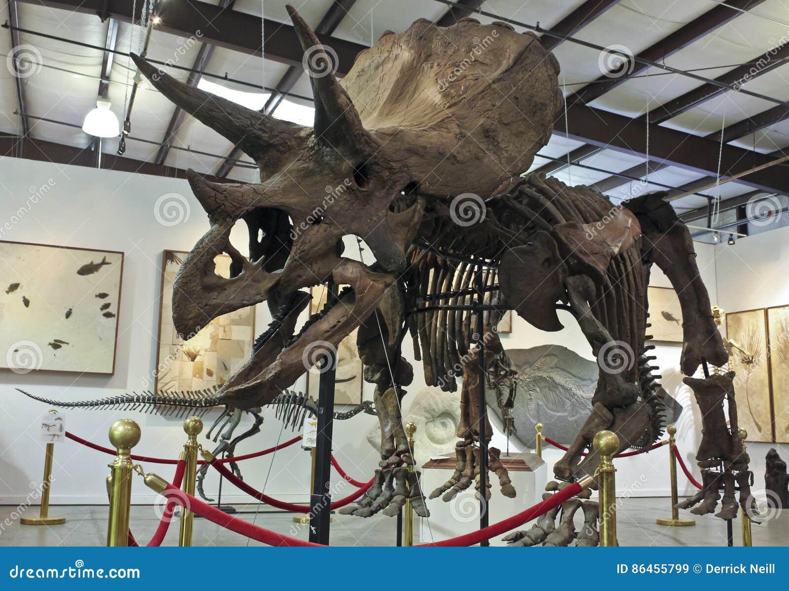 un squelette de triceratops aux fossiles et aux minerais de geodecor image stock ditorial. Black Bedroom Furniture Sets. Home Design Ideas
