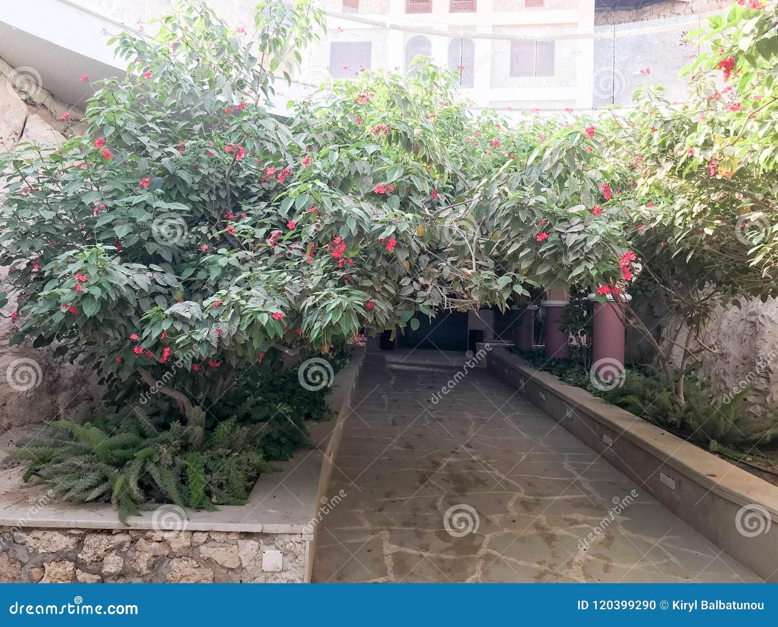 Un túnel, un arco de un arbusto verde hermoso, un árbol con las hojas del verde y flores rojas con pétalos y un camino de piedra