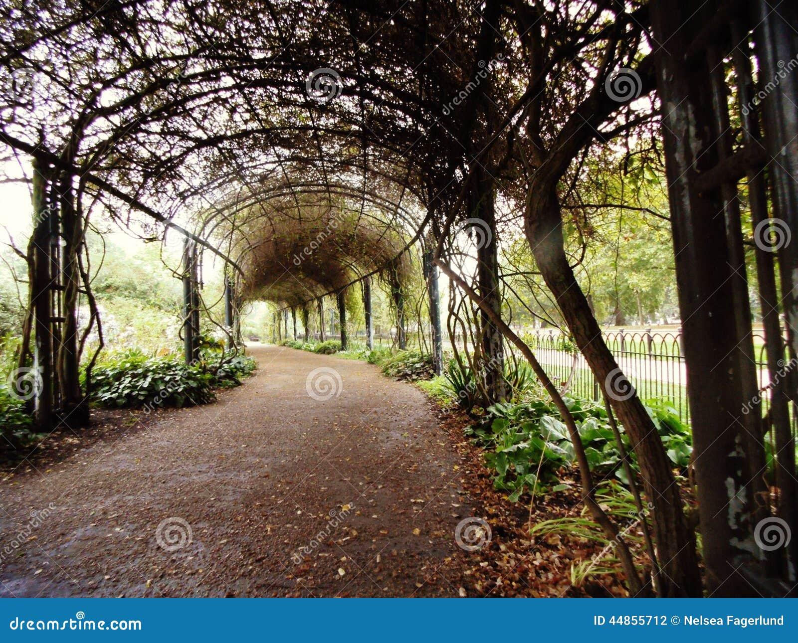 Un túnel del árbol