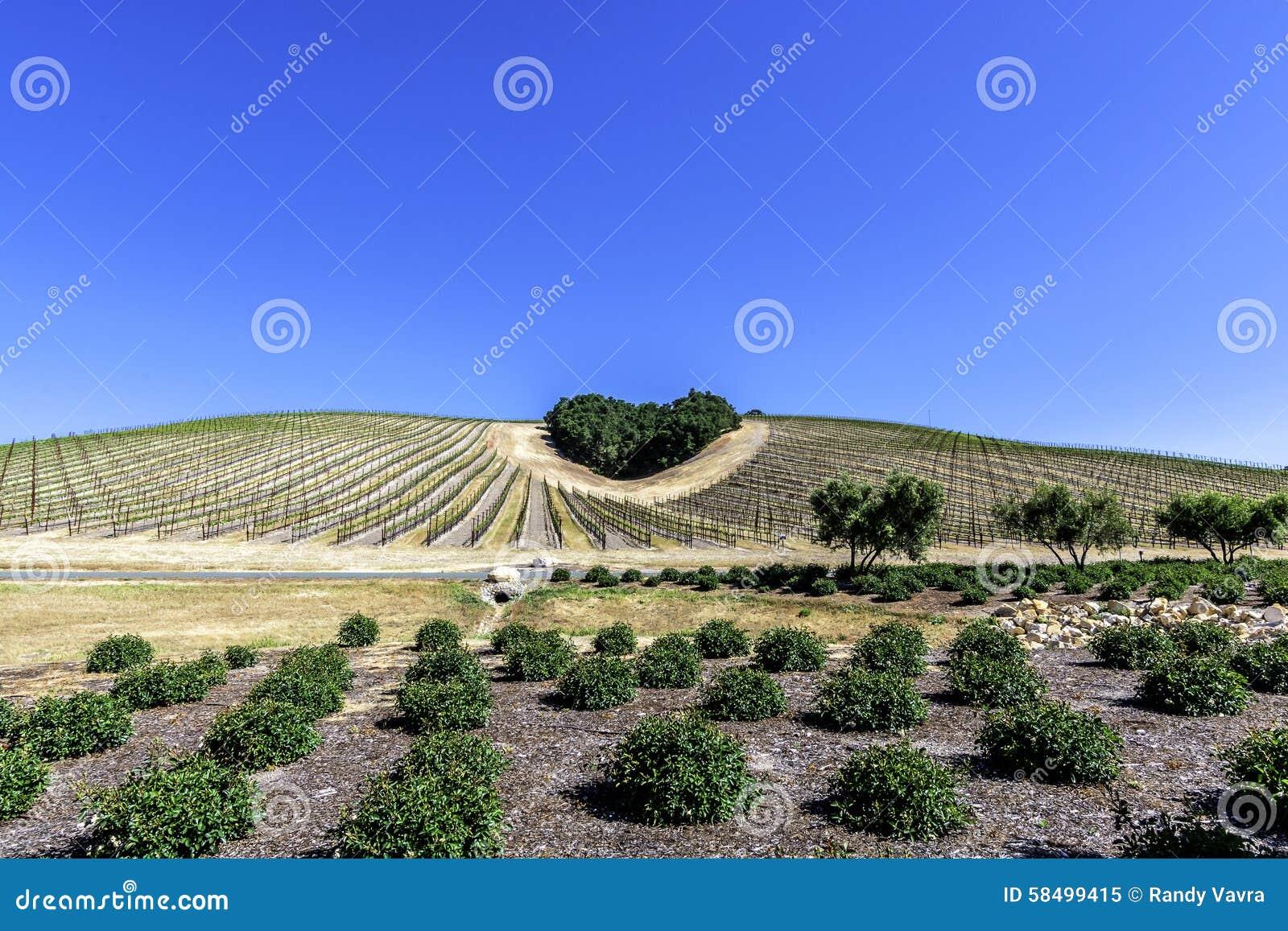un taillis des arbres forme une forme de coeur sur les collines sc niques image stock image. Black Bedroom Furniture Sets. Home Design Ideas