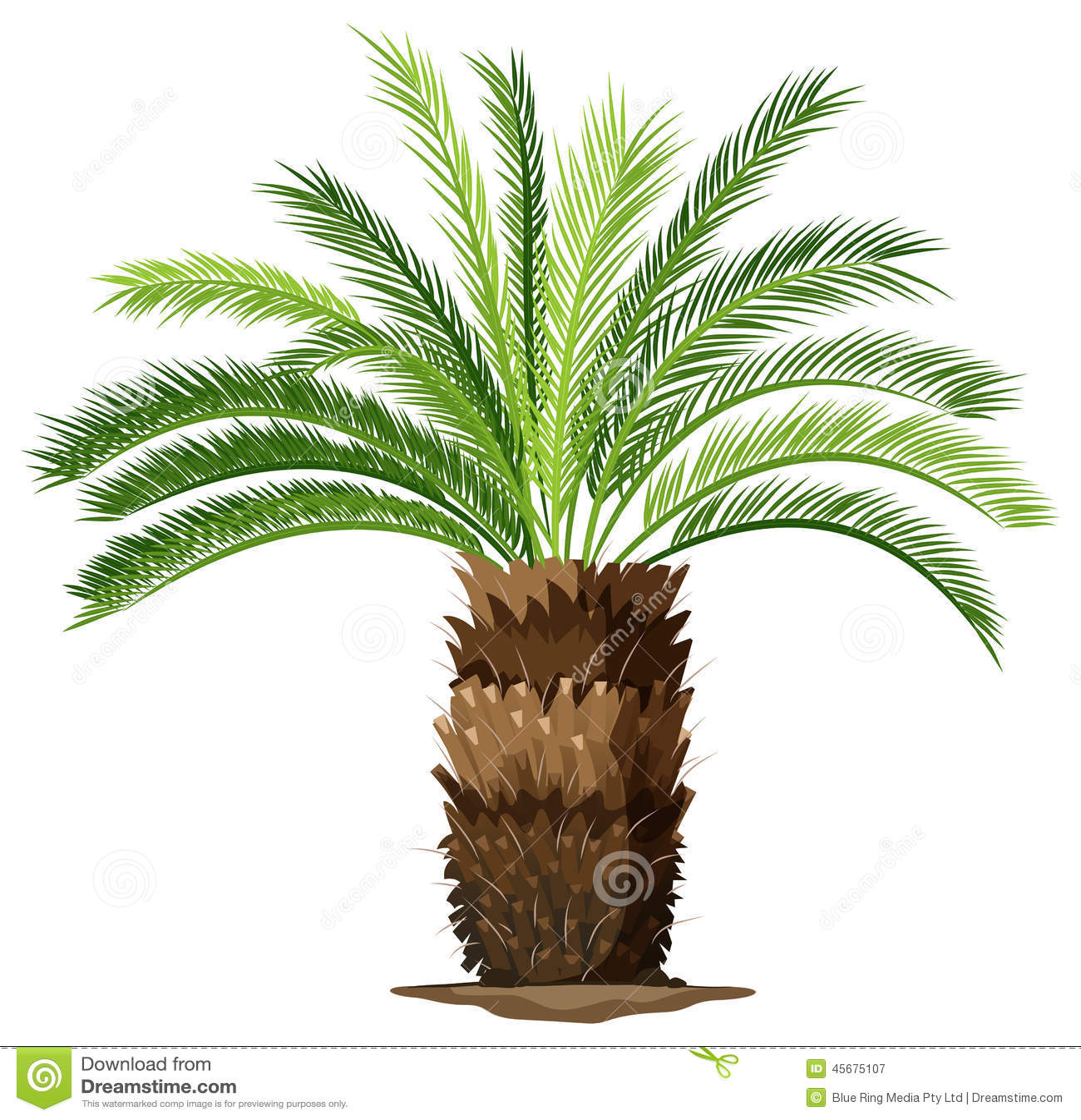 Un topview di una pianta della palma da sago illustrazione for Palma pianta