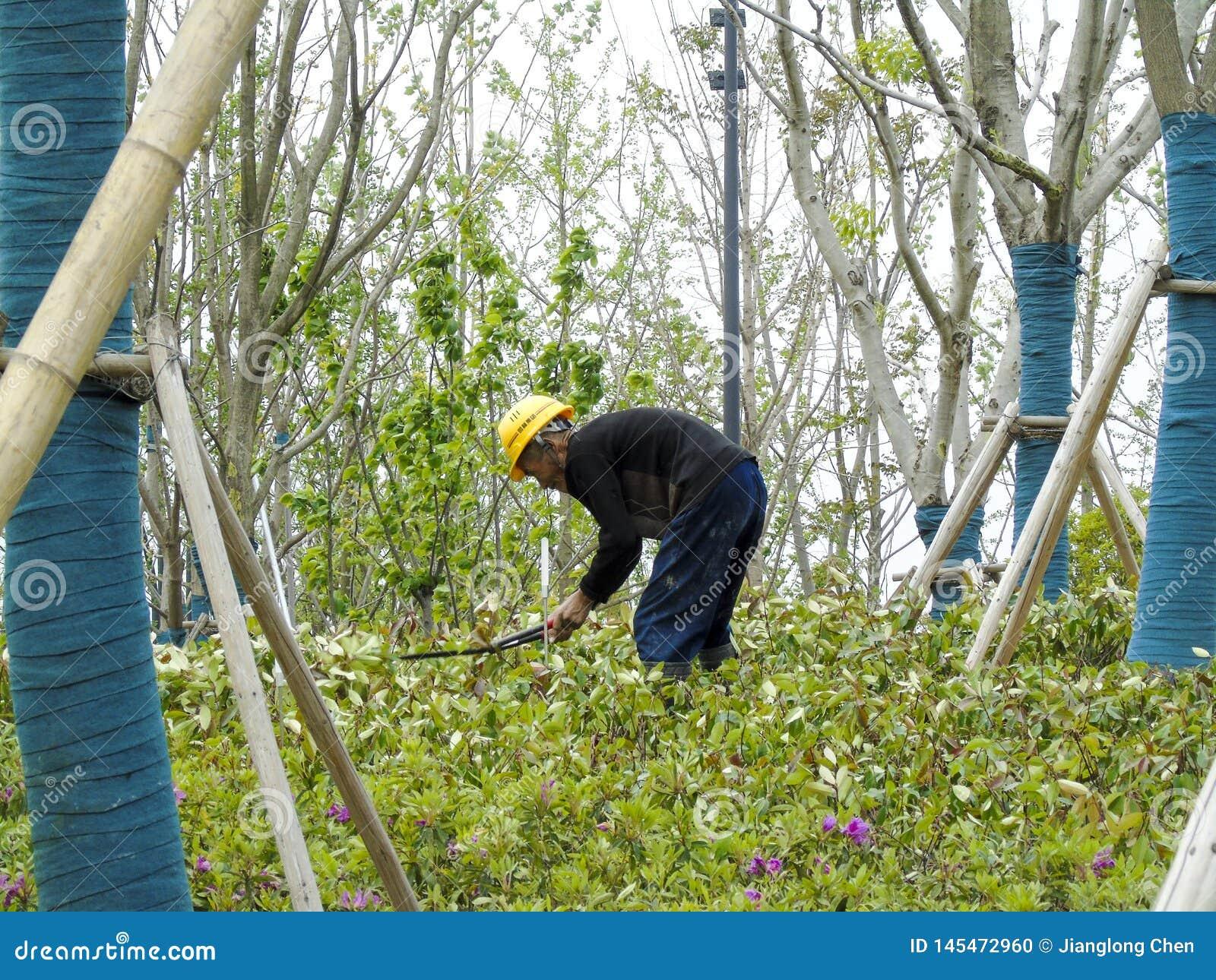 Un trabajador campesino que dobla encima para crecer las flores