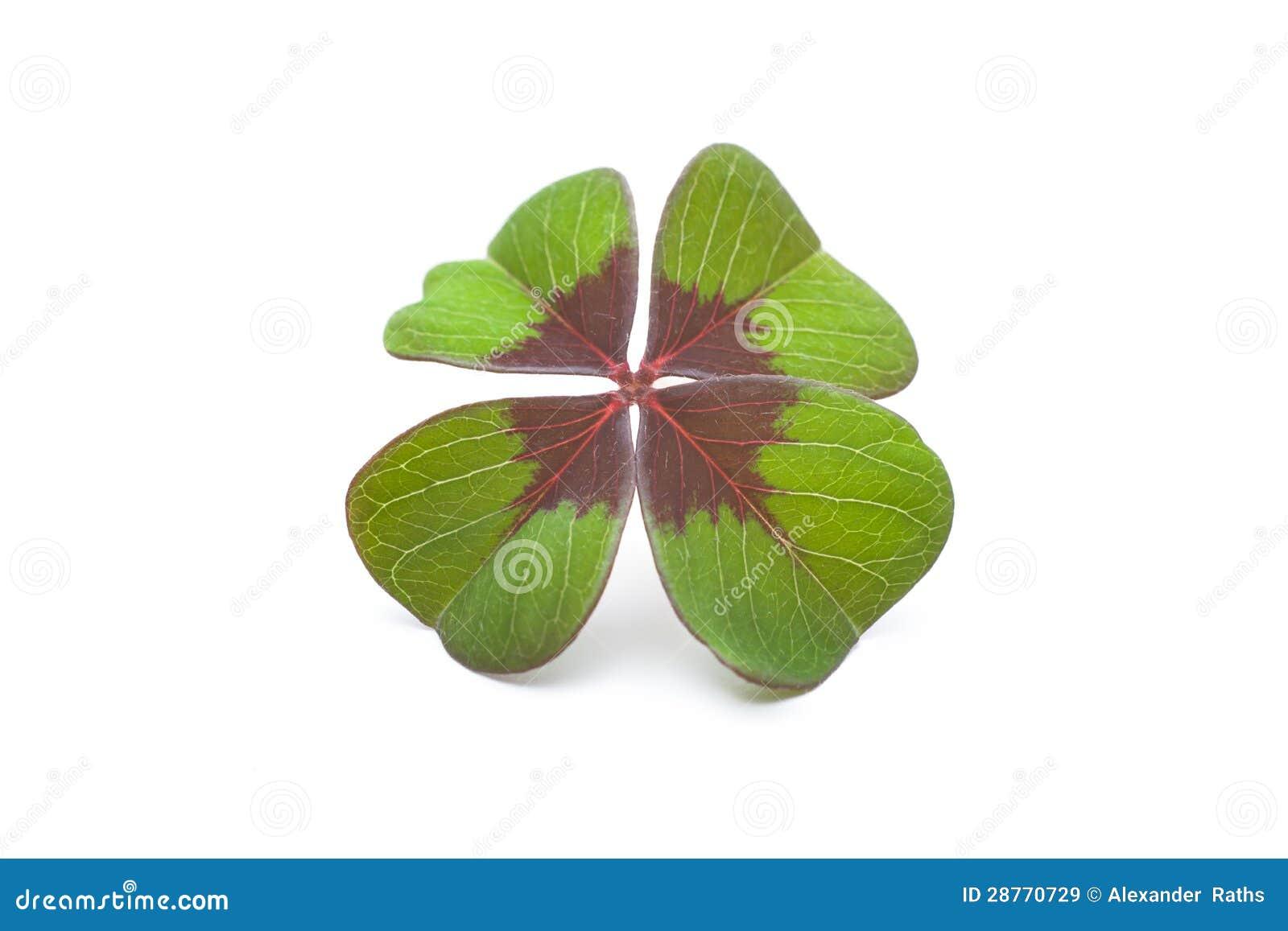 Un trifoglio di quattro foglie immagini stock libere da - Immagini di quadrifoglio a quattro foglie ...