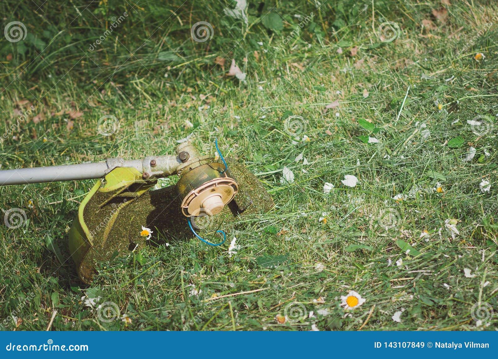 Un trimmer de tondeuse à gazon se trouve sur l herbe dans le jardin Biseau d herbe, coupant des pelouses