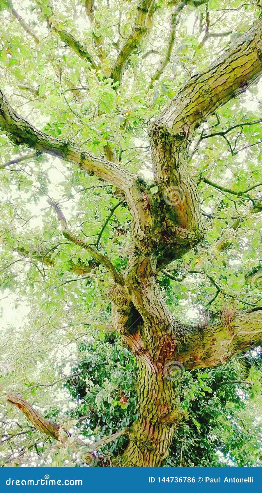 Un tronco molto twisty