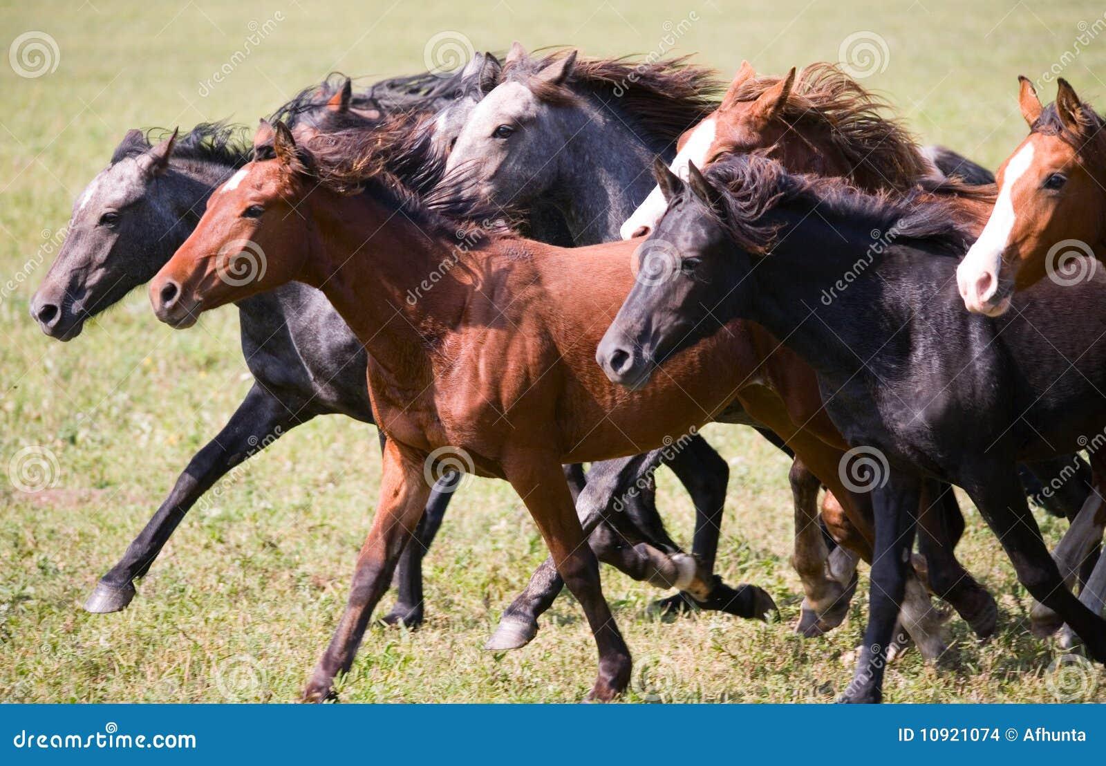 Un troupeau de jeunes chevaux