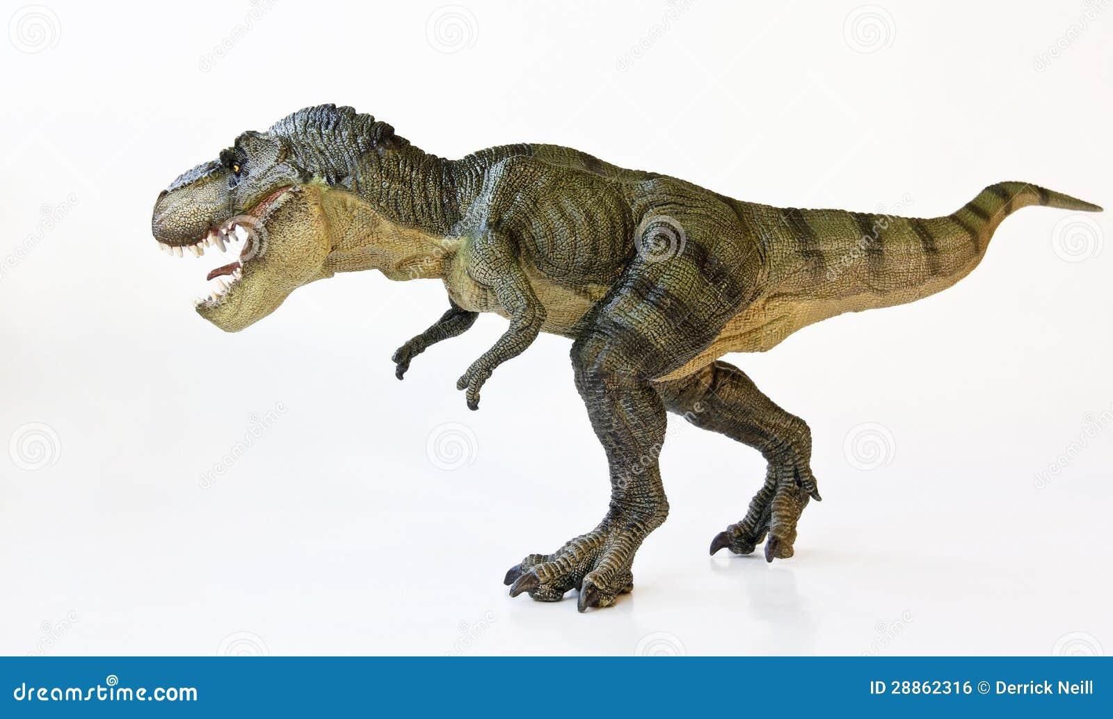 Un Tyrannosaurus chasse sur un fond blanc