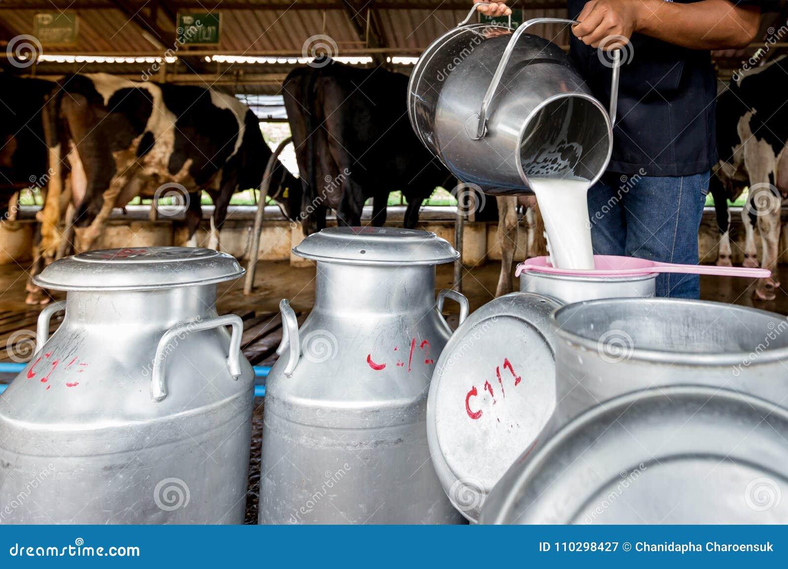 Un uomo sta versando il latte al serbatoio da latte in un azienda lattiera