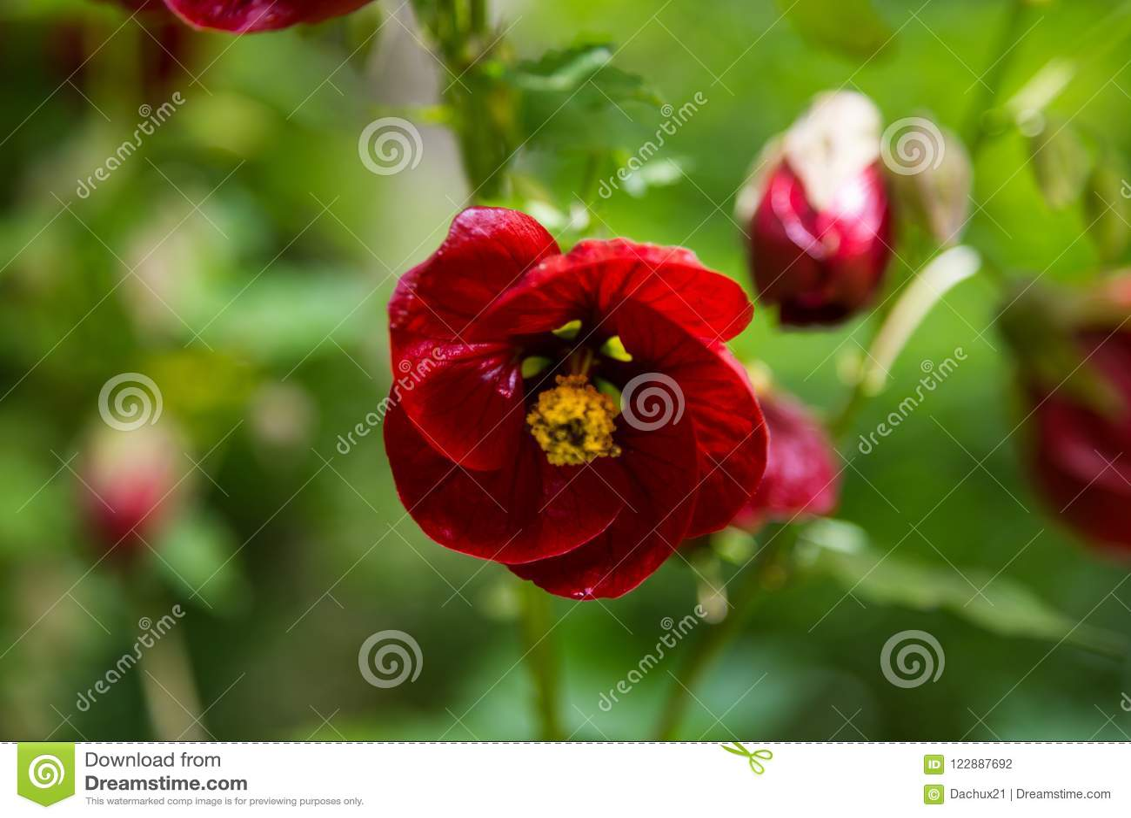 Un verano hermoso florece la floración en los parques de Londres