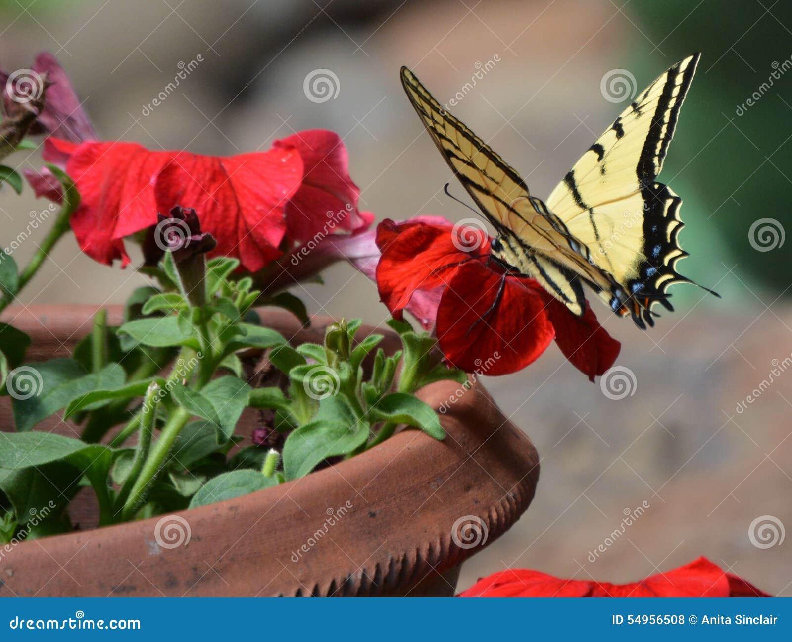 Un Verano Llenó De Las Mariposas En El Jardín De Flores Foto de ...