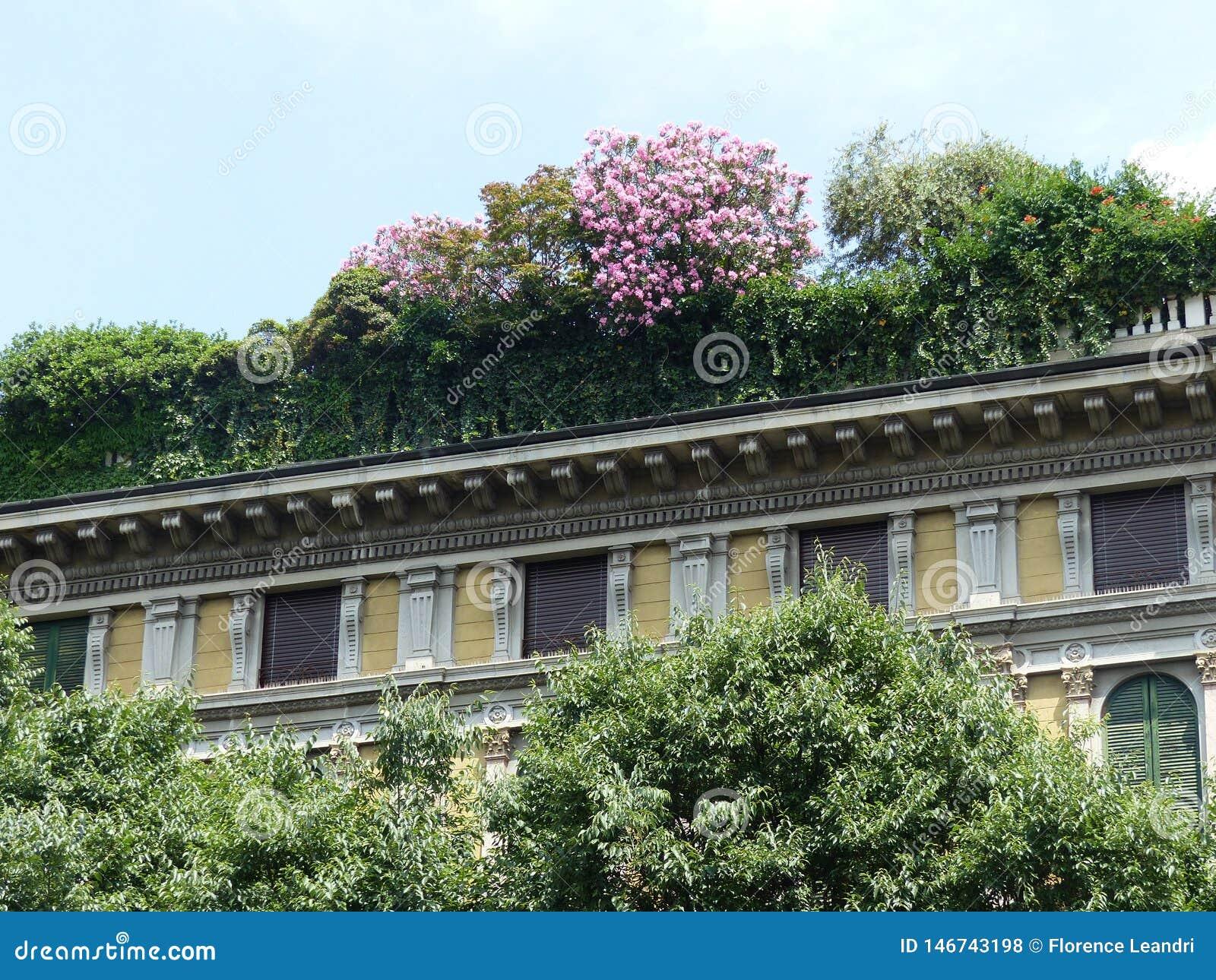 Un Verde Y Una Terraza Floreciente En El Tejado De Un