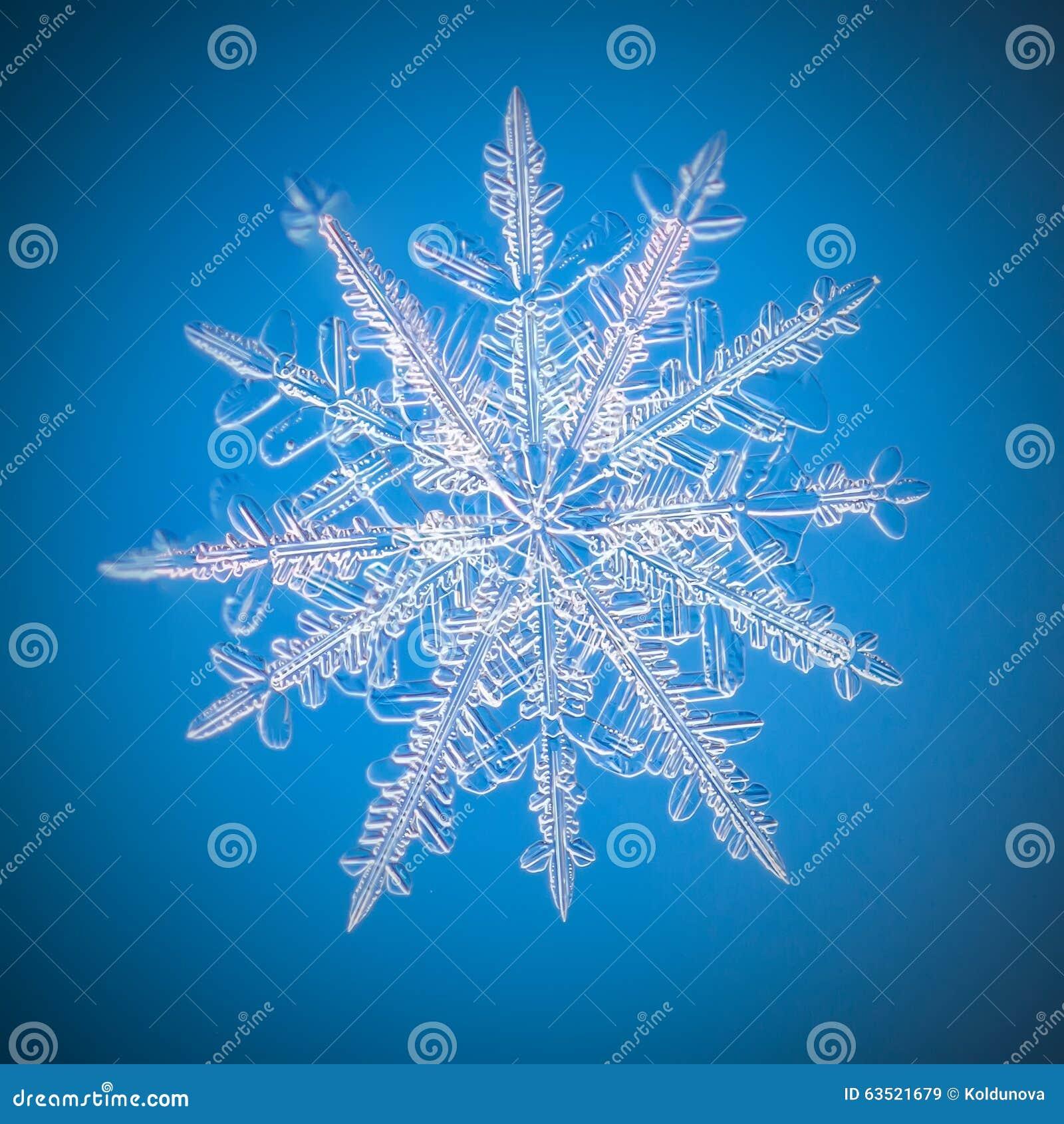 Un vrai macro de flocon de neige se trouve sur un fond bleu image stock image du glace givr - Gabarit flocon de neige a decouper ...
