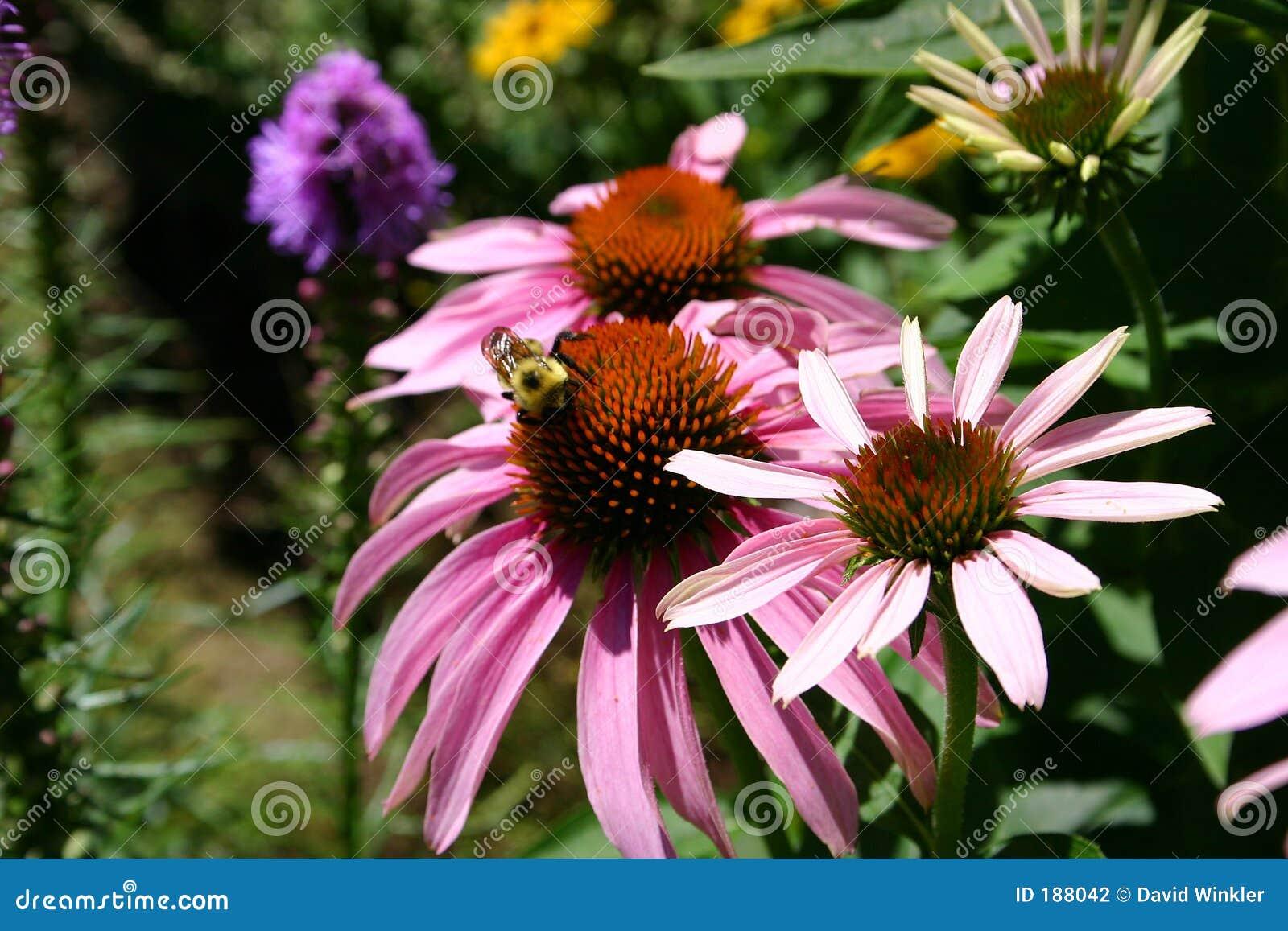 Una abeja en el jardín 3