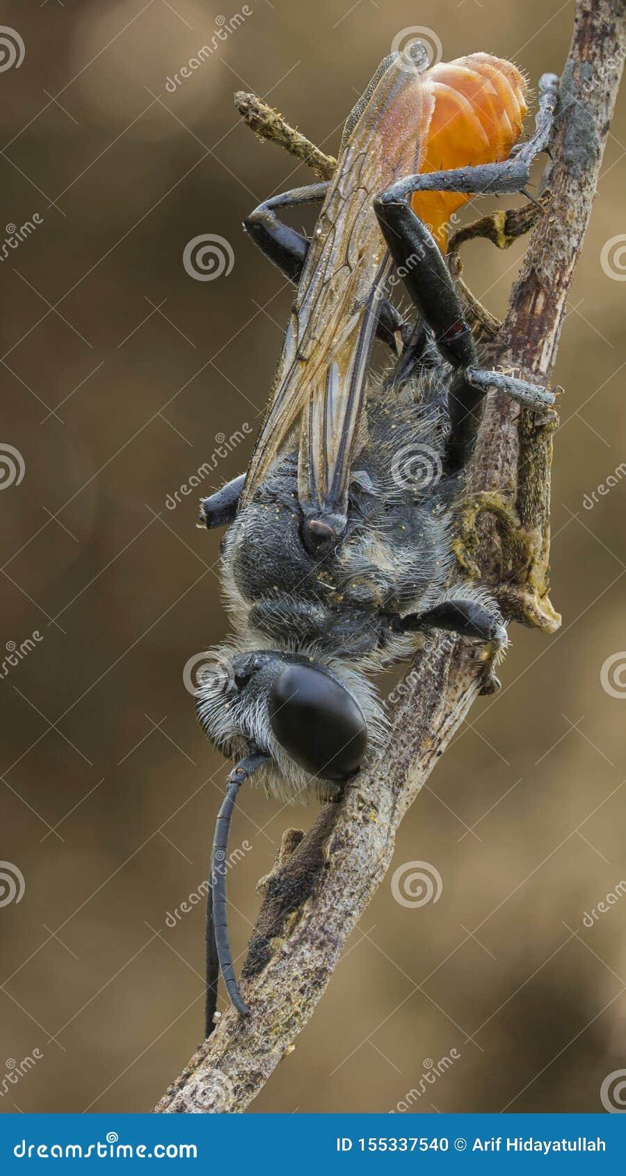 Una avispa negra en la rama