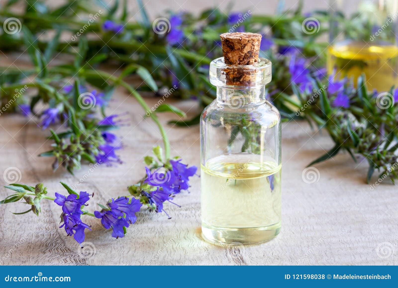Una bottiglia dell olio essenziale dell issopo con l issopo di fioritura fresco