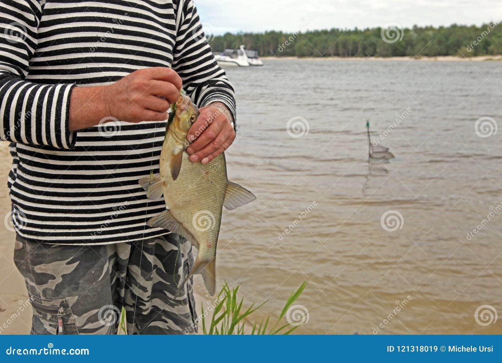 Una brema común, brema de agua dulce del brema, de bronce, o brema de la carpa en mano del ` s del pescador