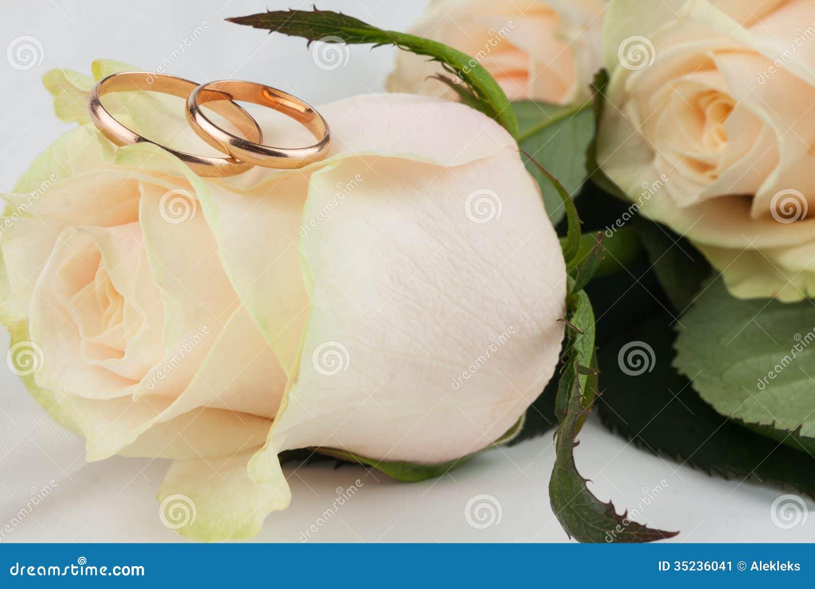 Una Bugia Di Due Fedi Nuziali Su Una Rosa Immagine Stock ...