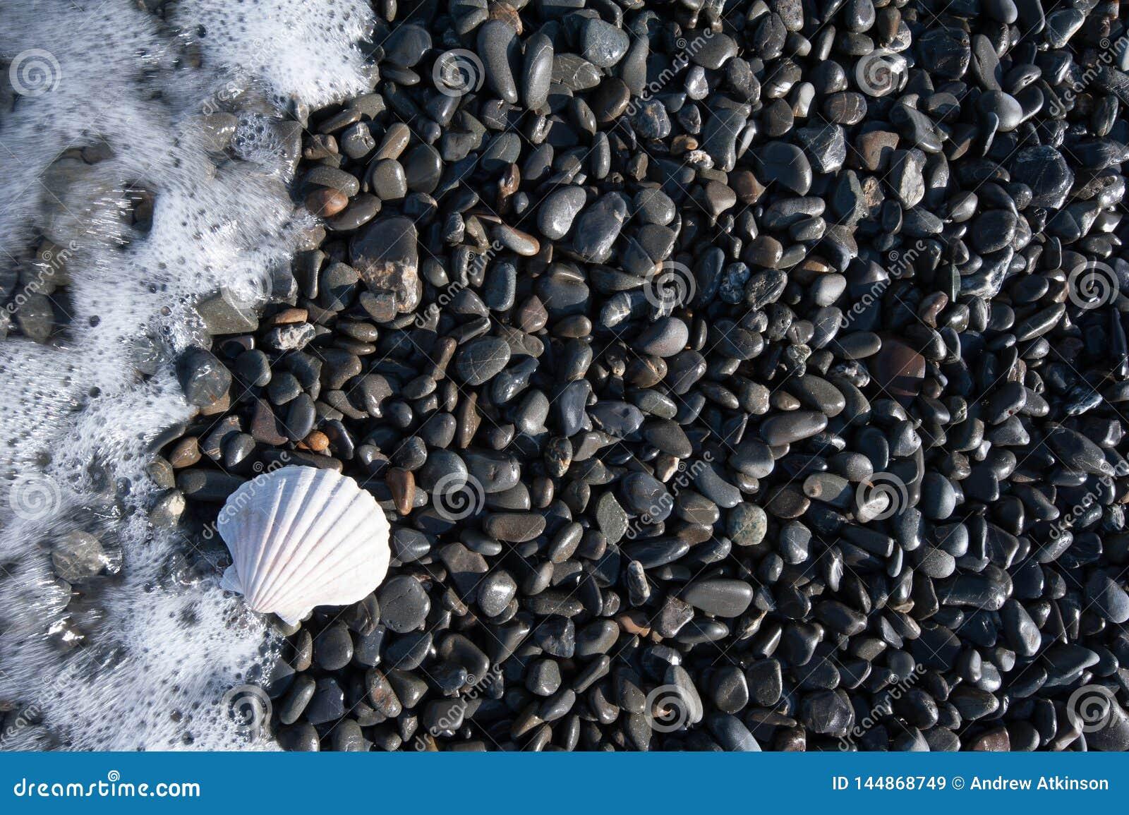 Una cáscara blanca en un Pebble Beach negro con las ondas