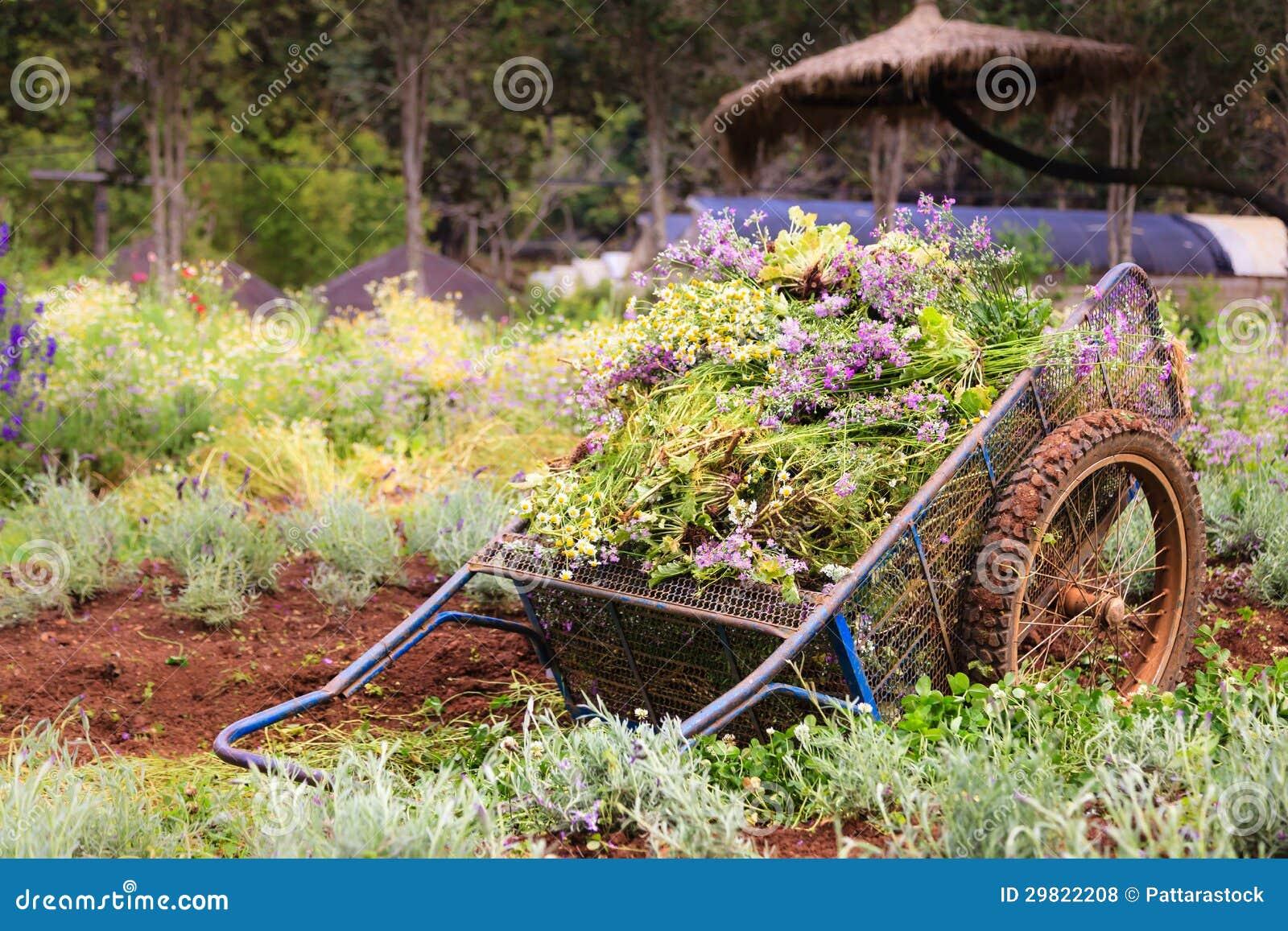 Una carretilla de mano vieja en el campo de flores fotos for Carretilla de mano segunda mano