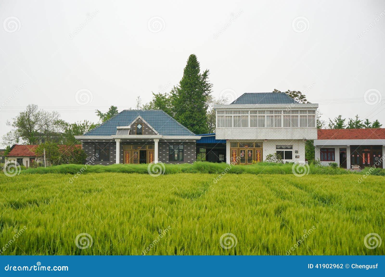 Una casa china del pueblo del ladrillo y un árbol grande del ginkgo