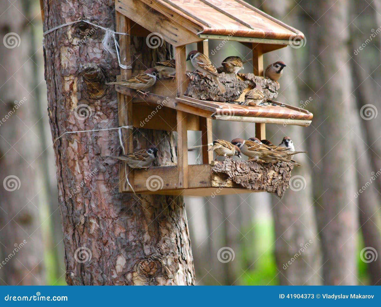 Una casa del estornino para los pájaros
