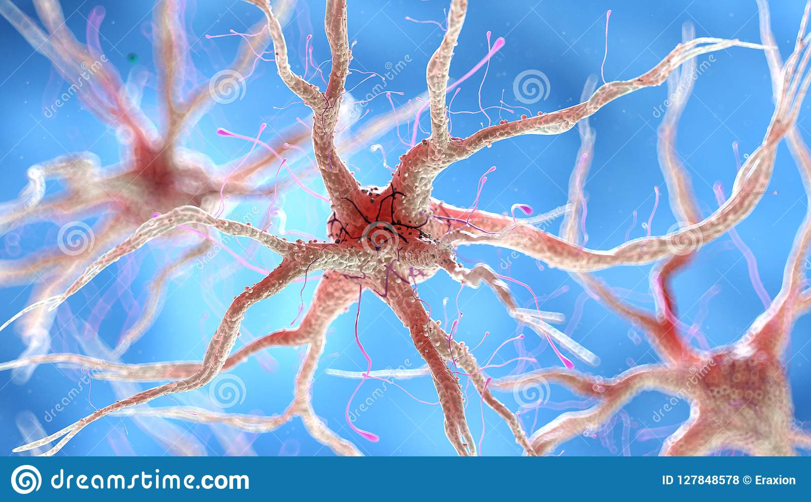 Una cellula nervosa umana sana