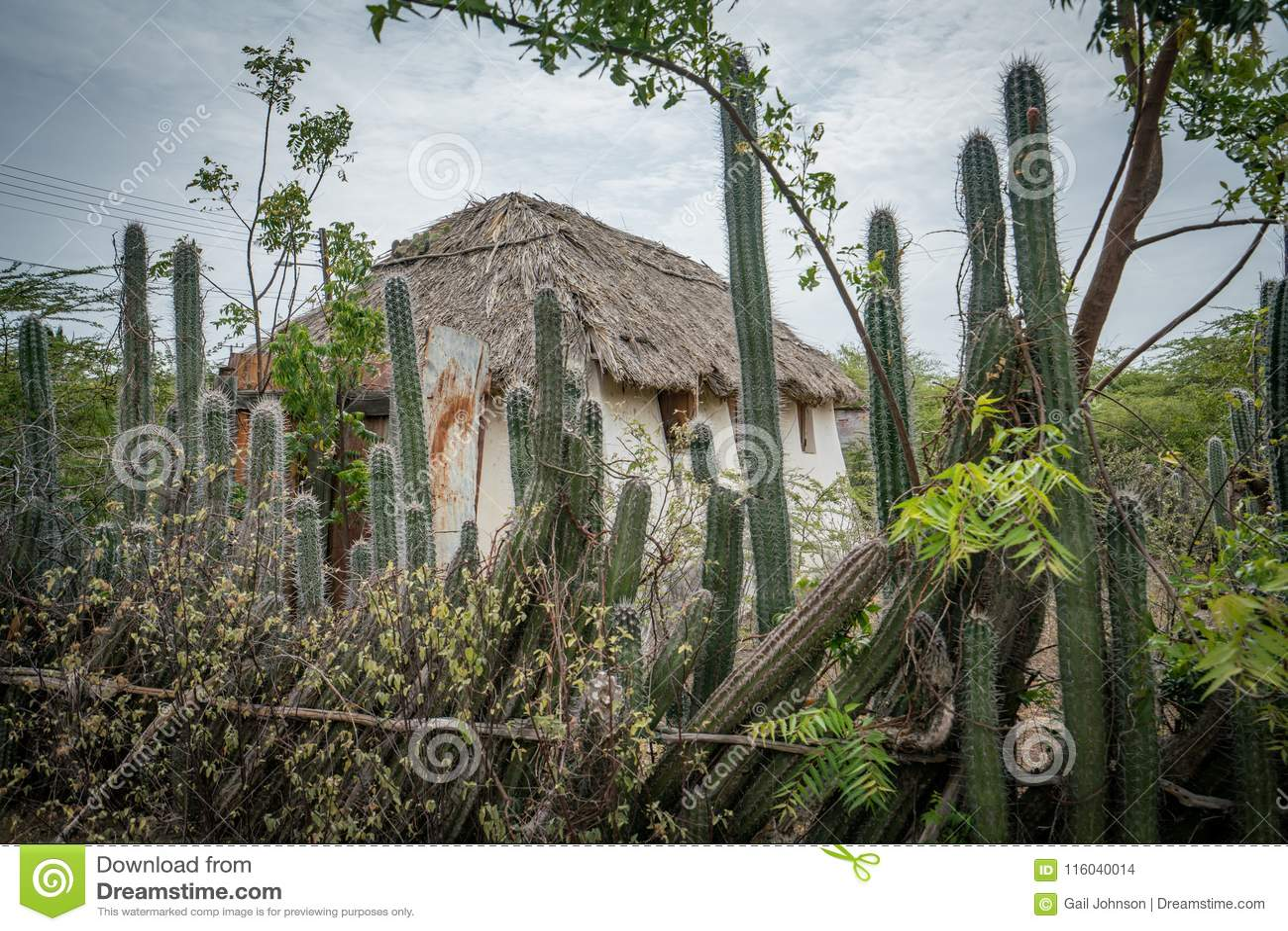 Una choza auxiliar vieja - cerca Curacao Views del cactus