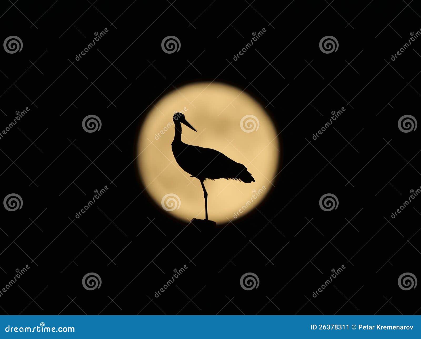 Una cicogna bianca davanti alla luna piena