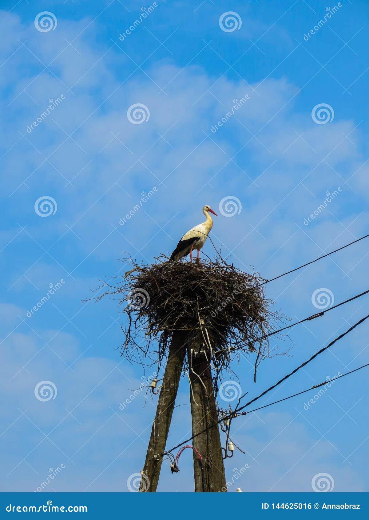 Una cigüeña blanca se coloca en una jerarquía que se doble en un polo para los alambres