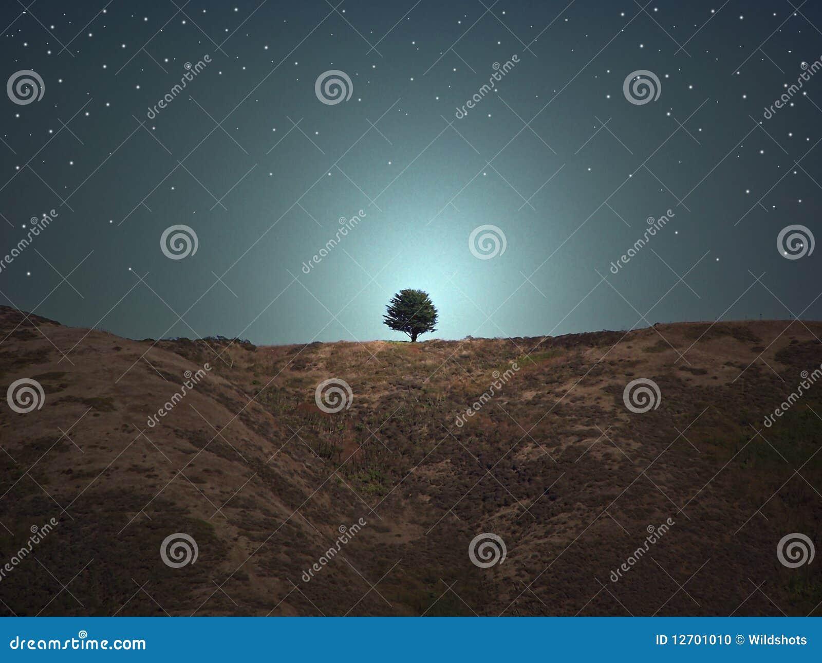 Una collina dell albero