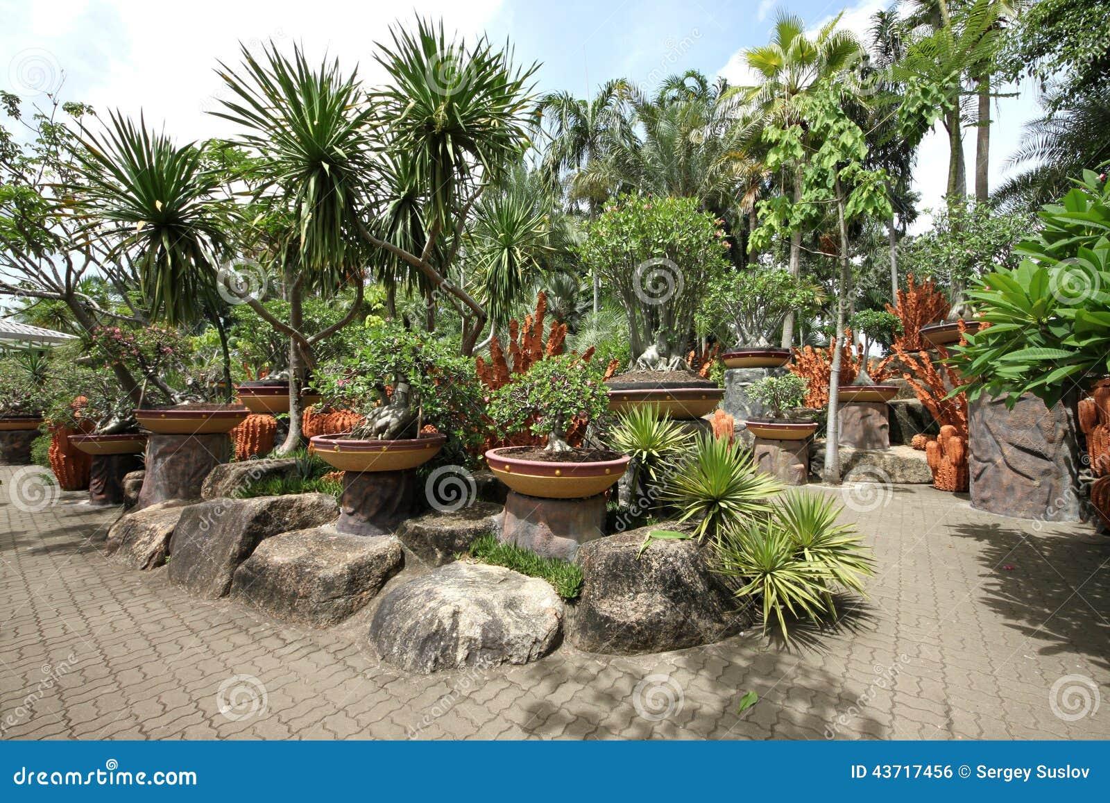 Una composizione dei vasi con i fiori e pietre ed alberi for Alberi da giardino con fiori