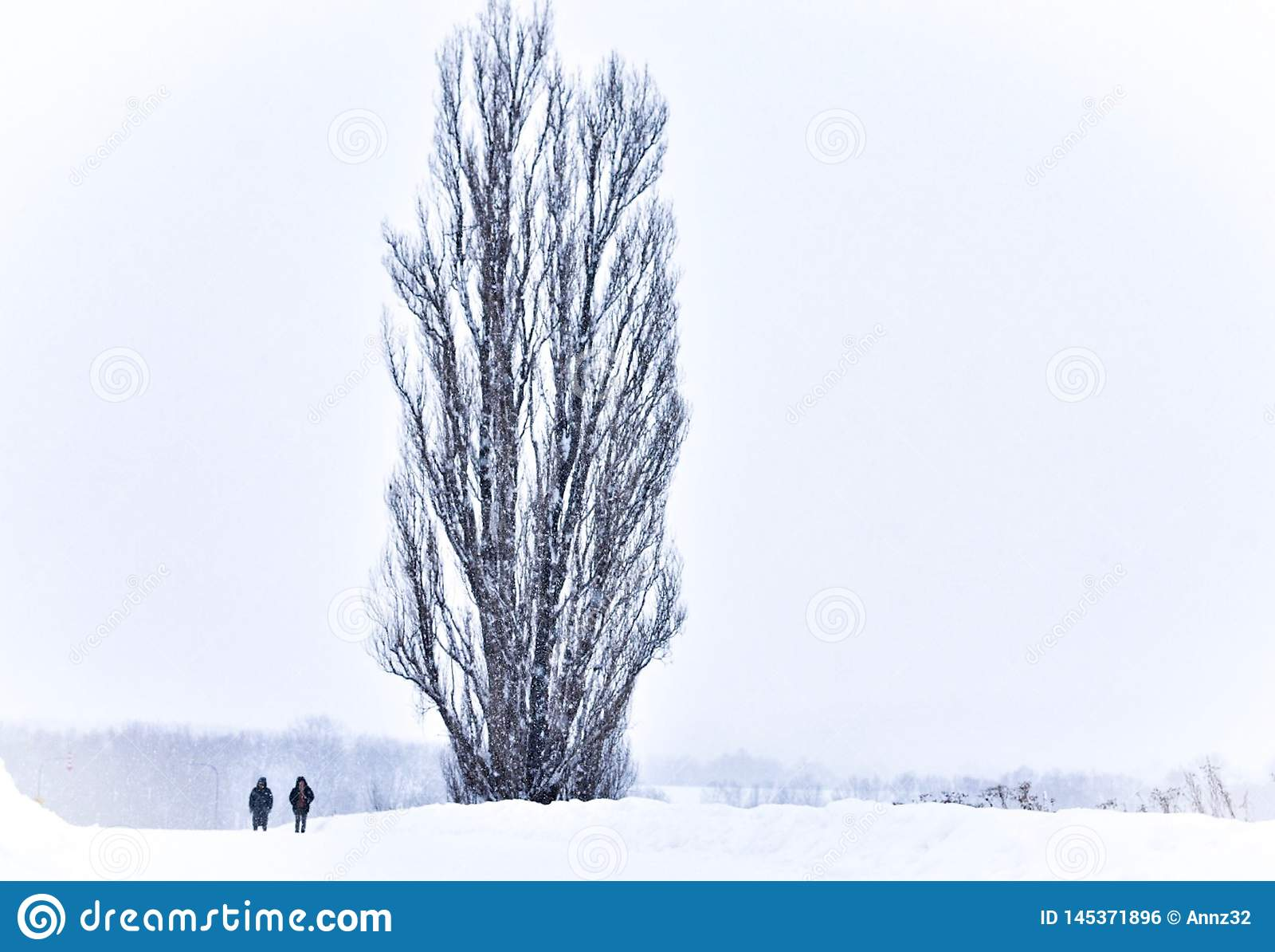 Una coppia accanto all albero di KEN e di Maria