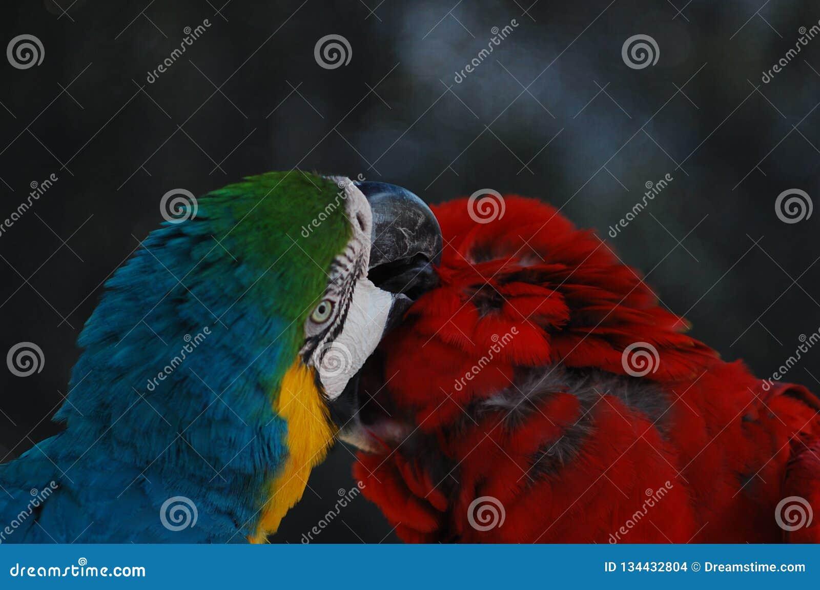 Una coppia adorabile le are nel selvaggio