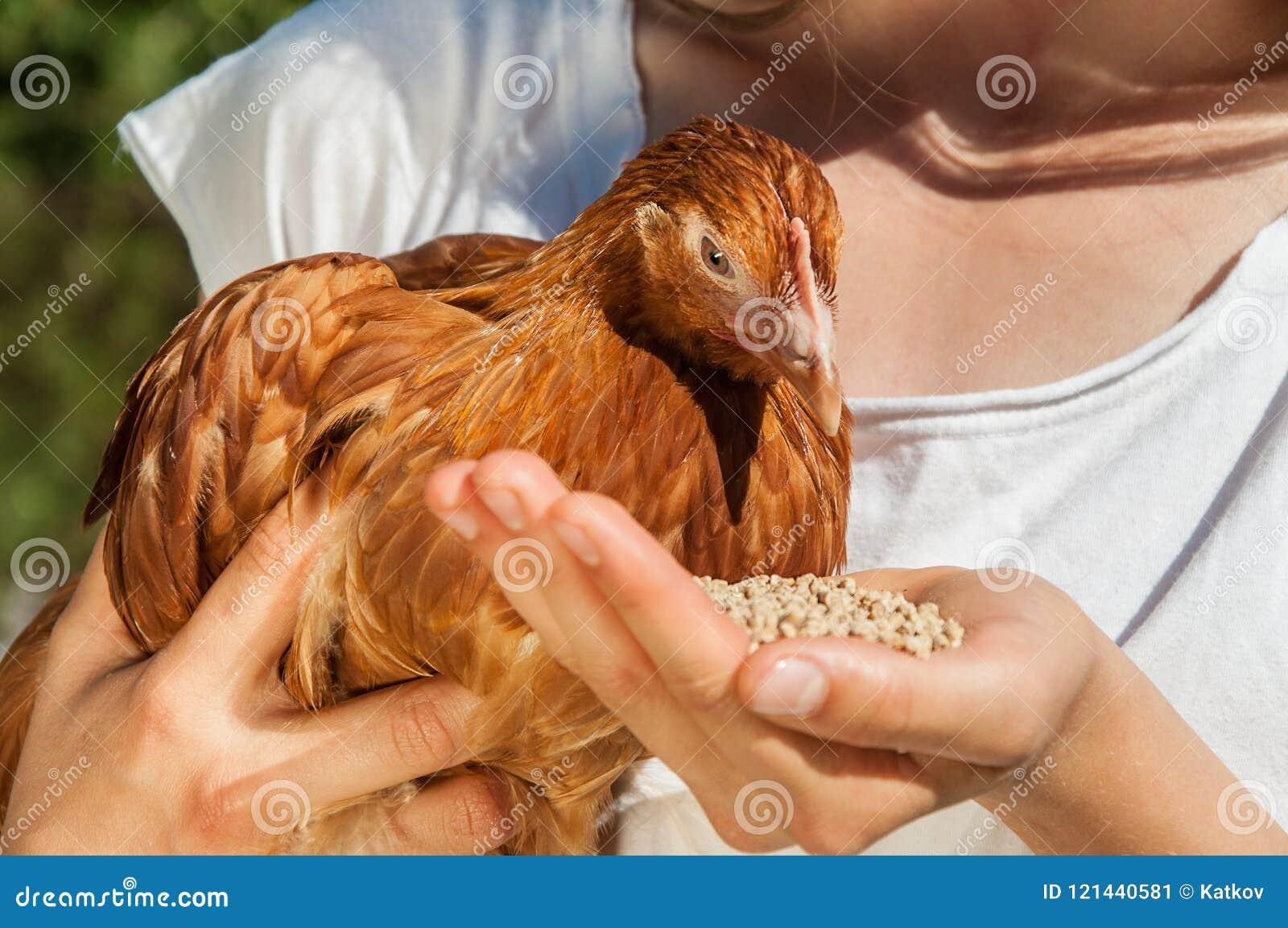 Una donna sta alimentando un pollo