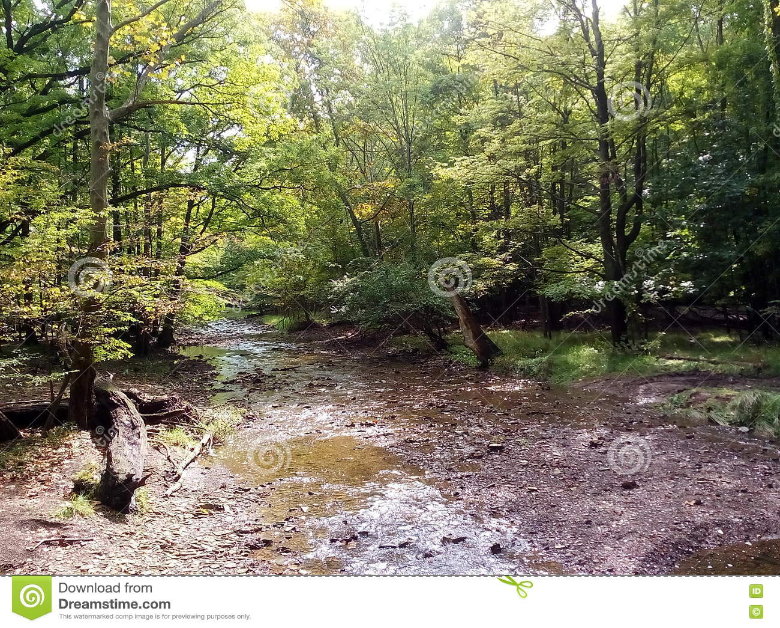 Una escena de un bosque en Ohio