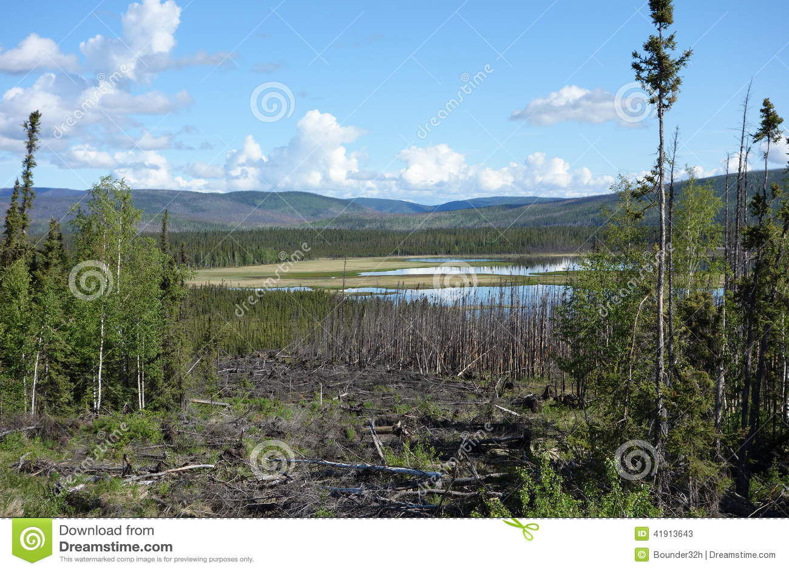 Una escena hermosa en Alaska