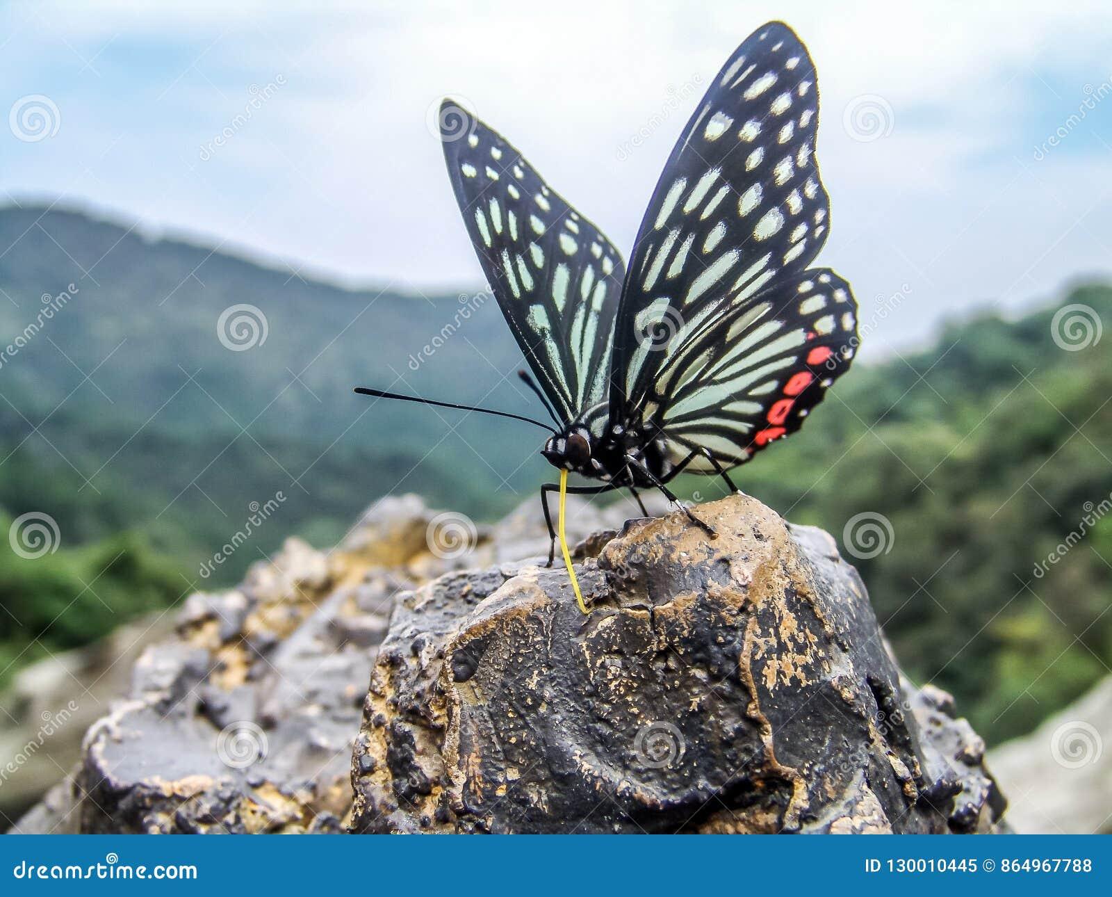 Una farfalla che riposa su una roccia