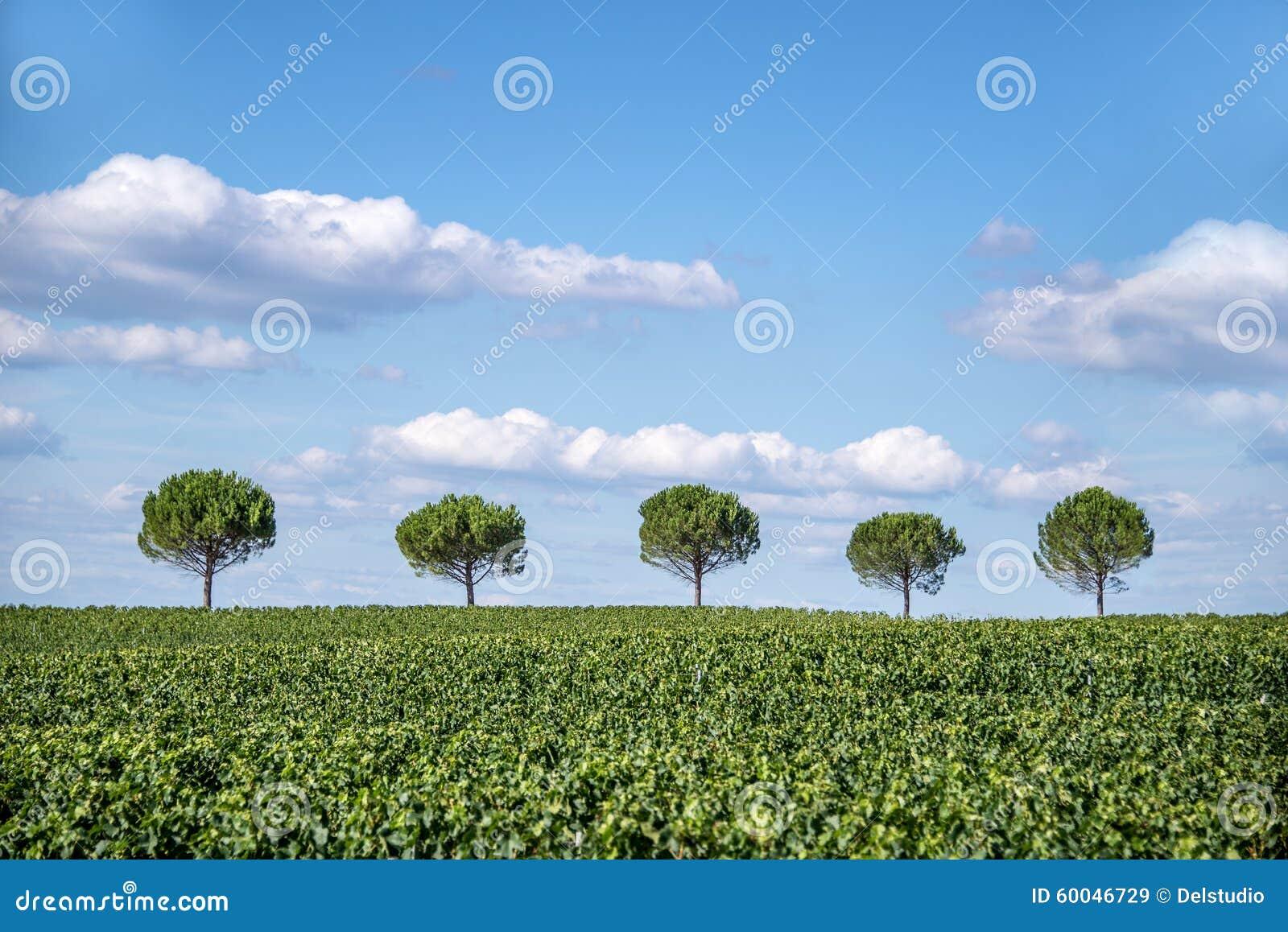 7b30e026bf7e Una fila di cinque alberi immagine stock. Immagine di riga - 60046729