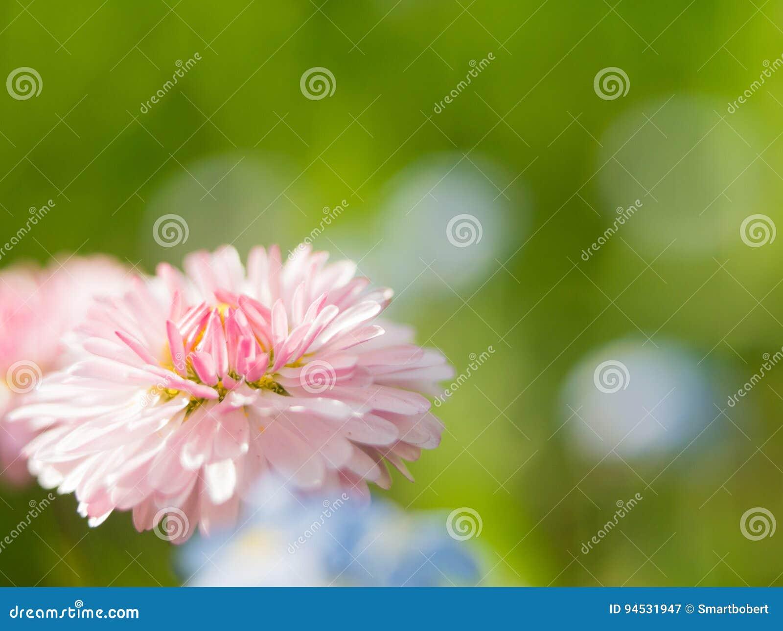 Vistoso Flor En Uña Colección de Imágenes - Ideas Para Pintar Uñas ...