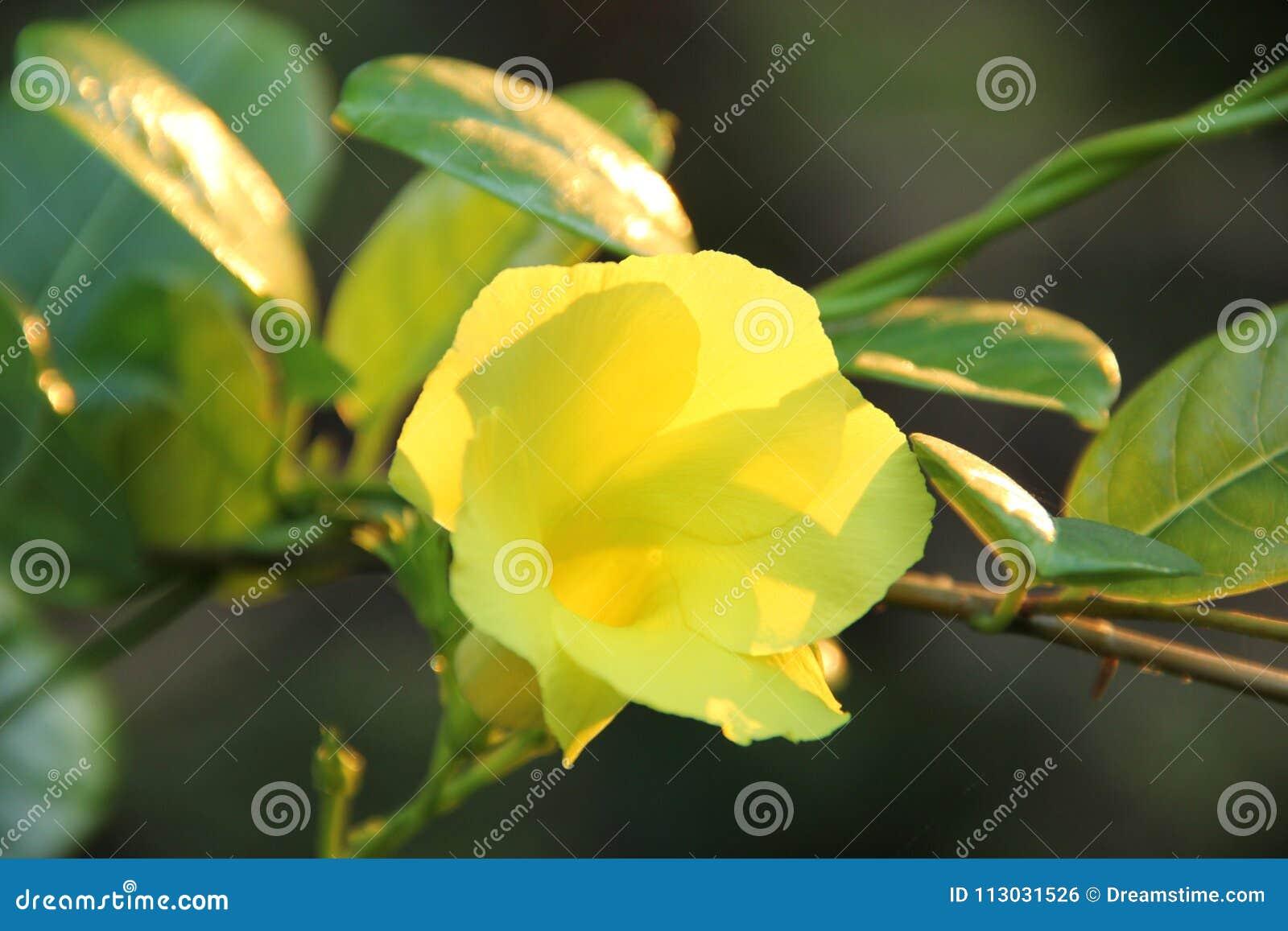 Una flor en Sri Lanka