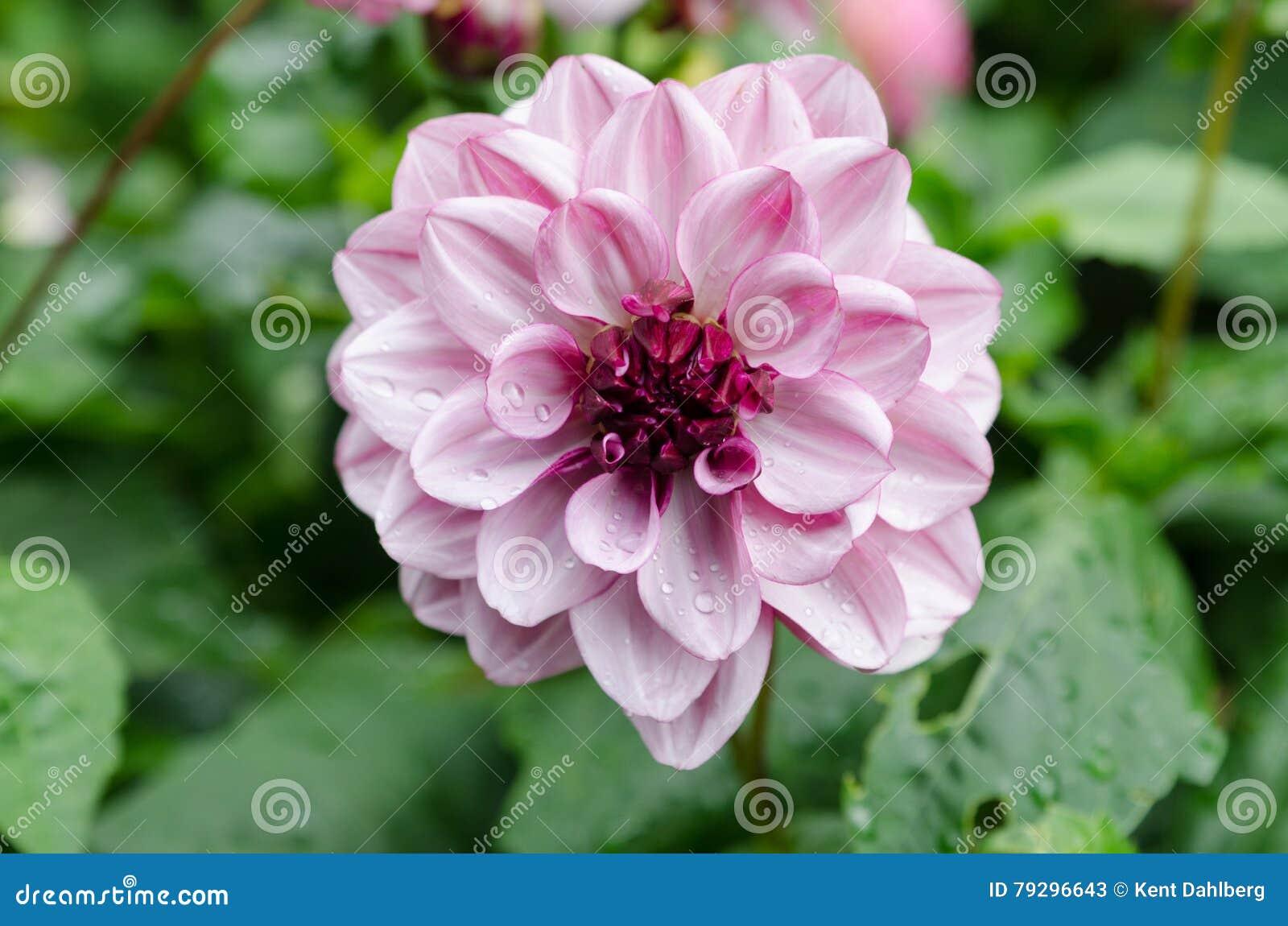Encantador Linda Foto Uñas De Flores Galería - Ideas de Pintar de ...