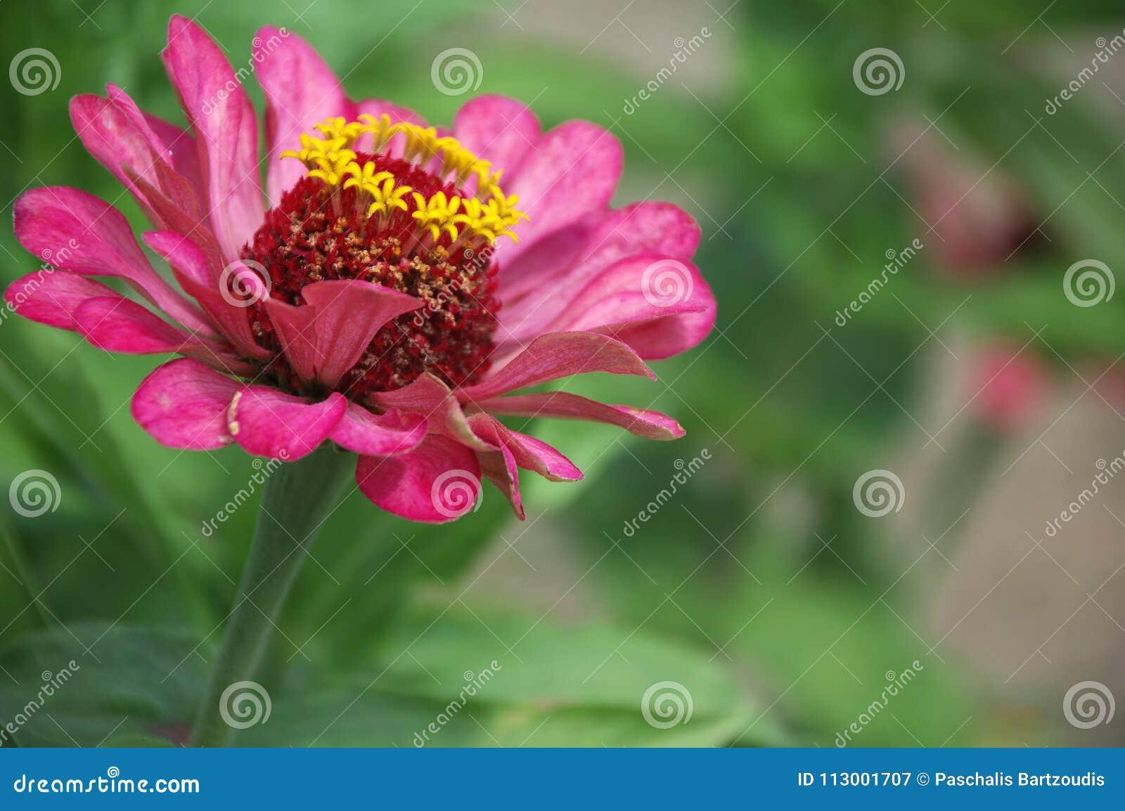 Increíble Flor De Lirio Arte De Uñas Cresta - Ideas Para Pintar Uñas ...