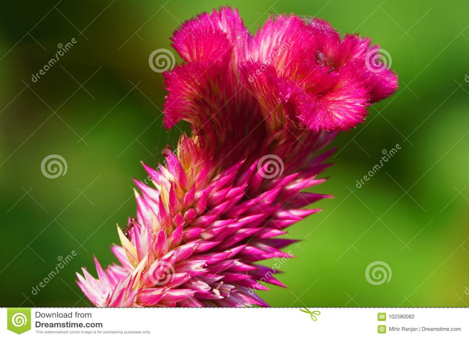 Bonito Haciendo Diseños De Flores Del Arte Del Uña De Ideas ...