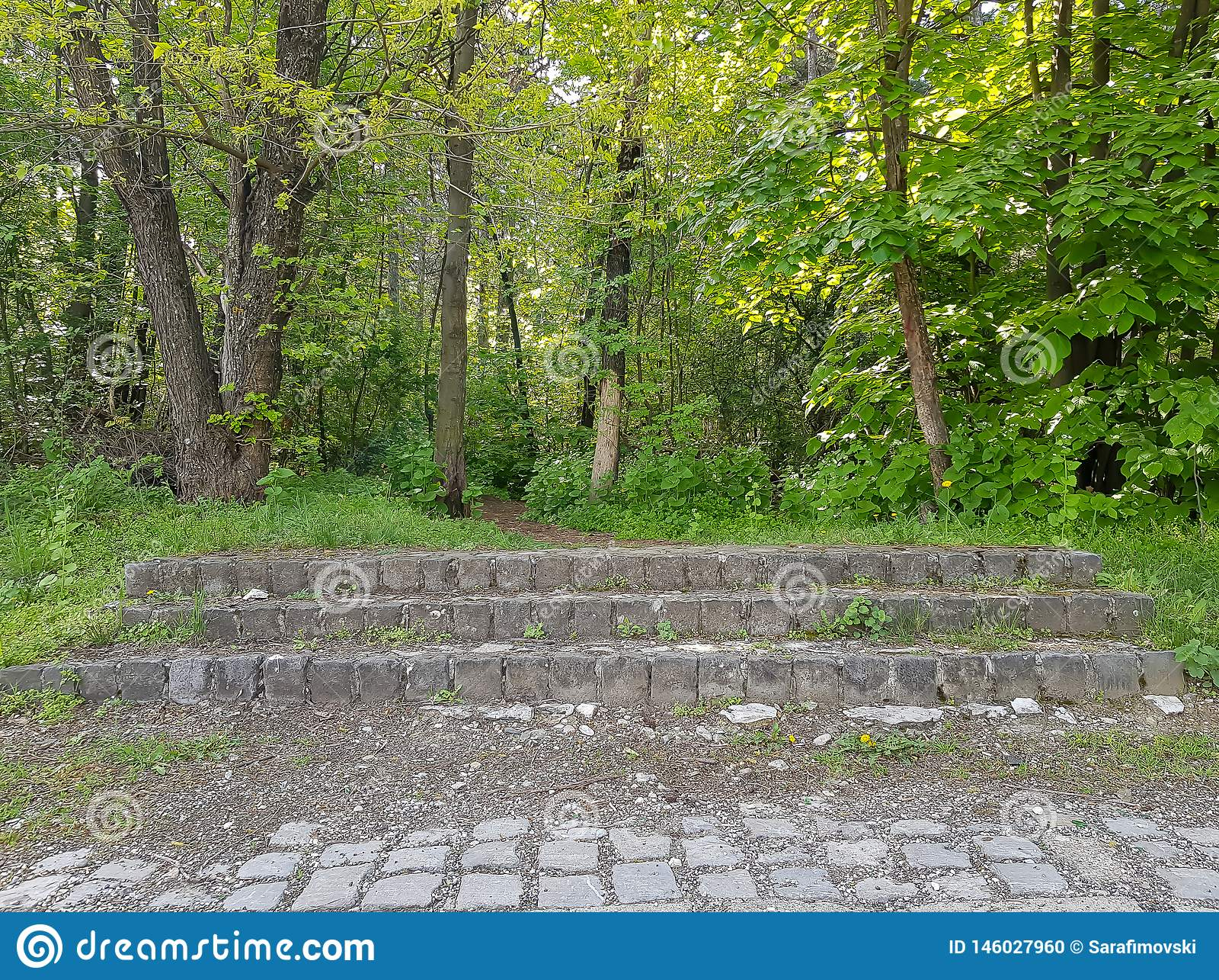 Una fotografía de escaleras en bosque, Vodno