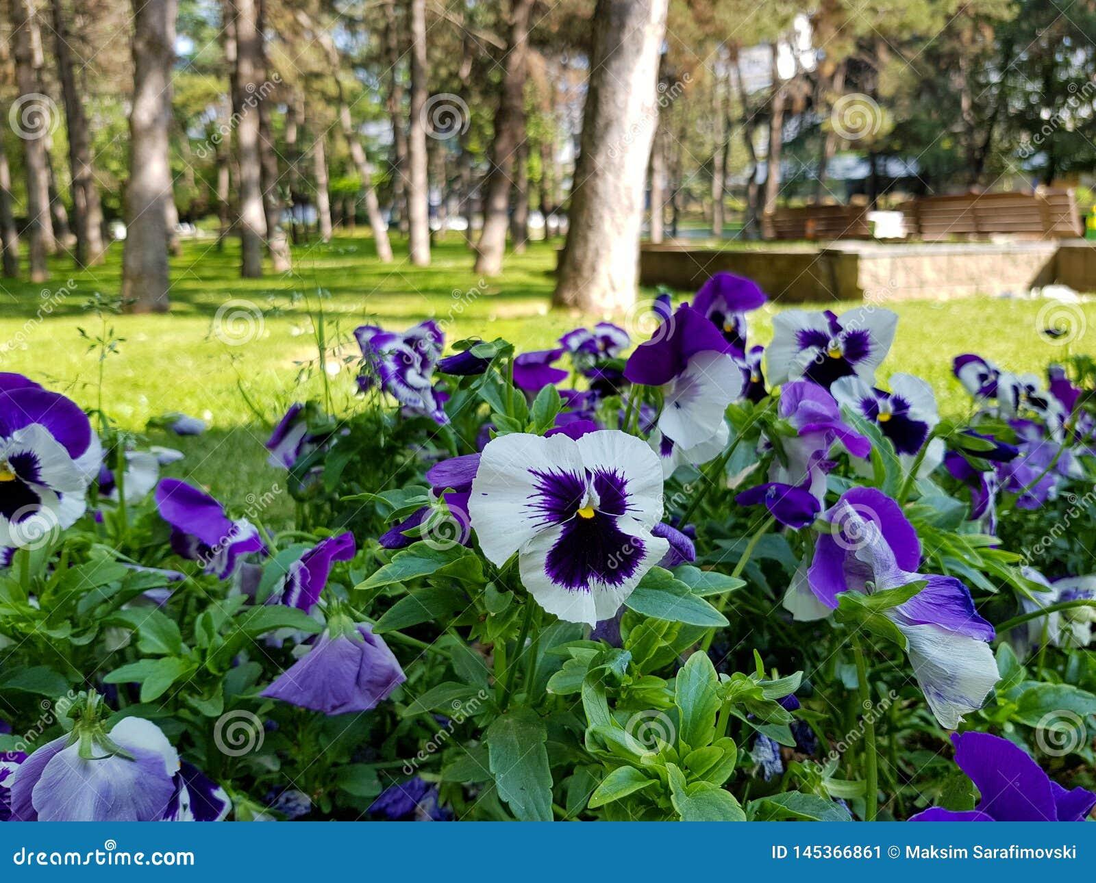 Una fotograf?a de flores hermosas en parque de la ciudad