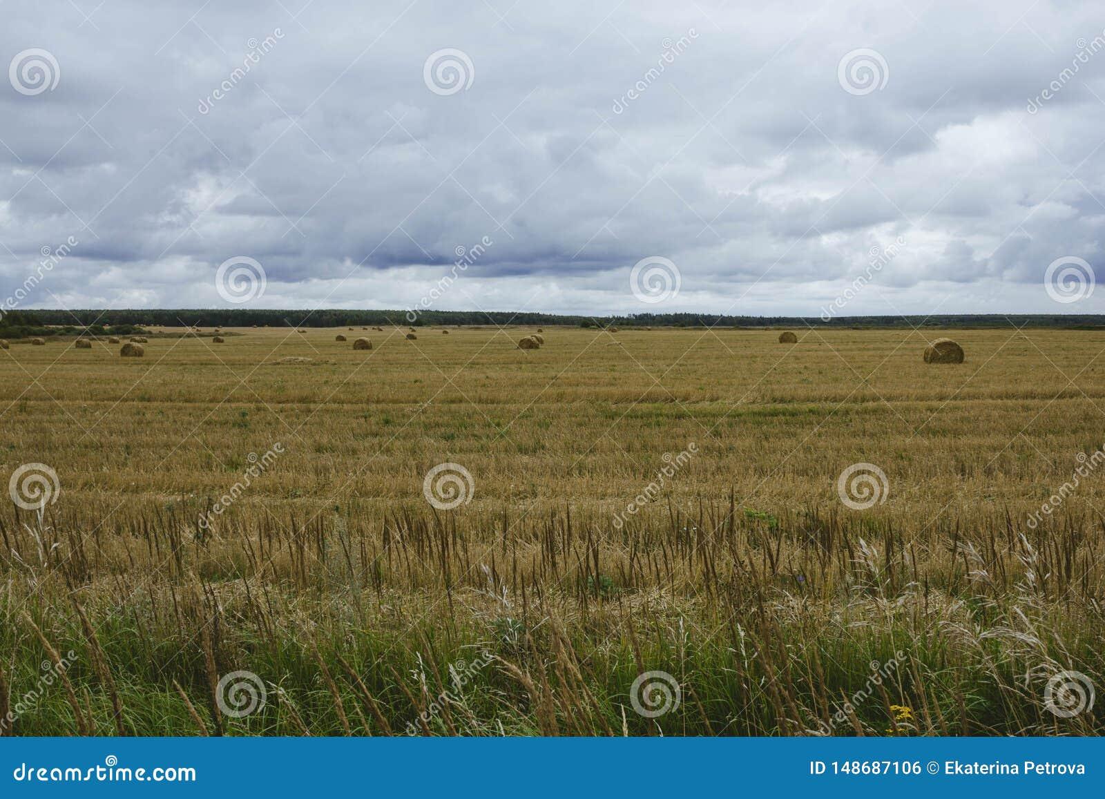 Una gavilla de heno en campo amarillo del oto?o en un cielo nublado del fondo La cosecha del heno Paisaje del oto?o en el campo