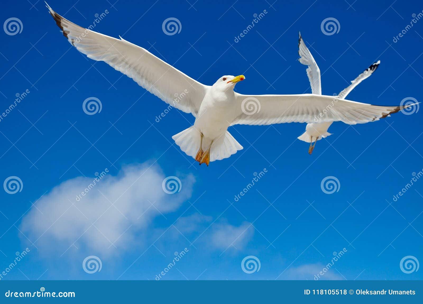 Una gaviota está volando en el cielo azul seabirds